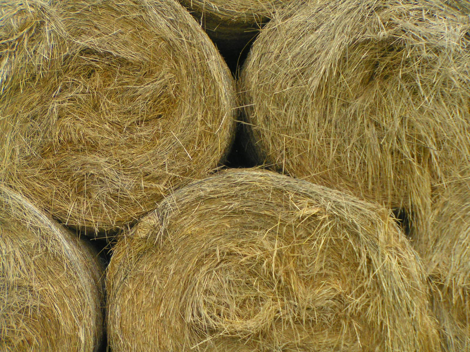 Straw And Hay Indian Restaurant