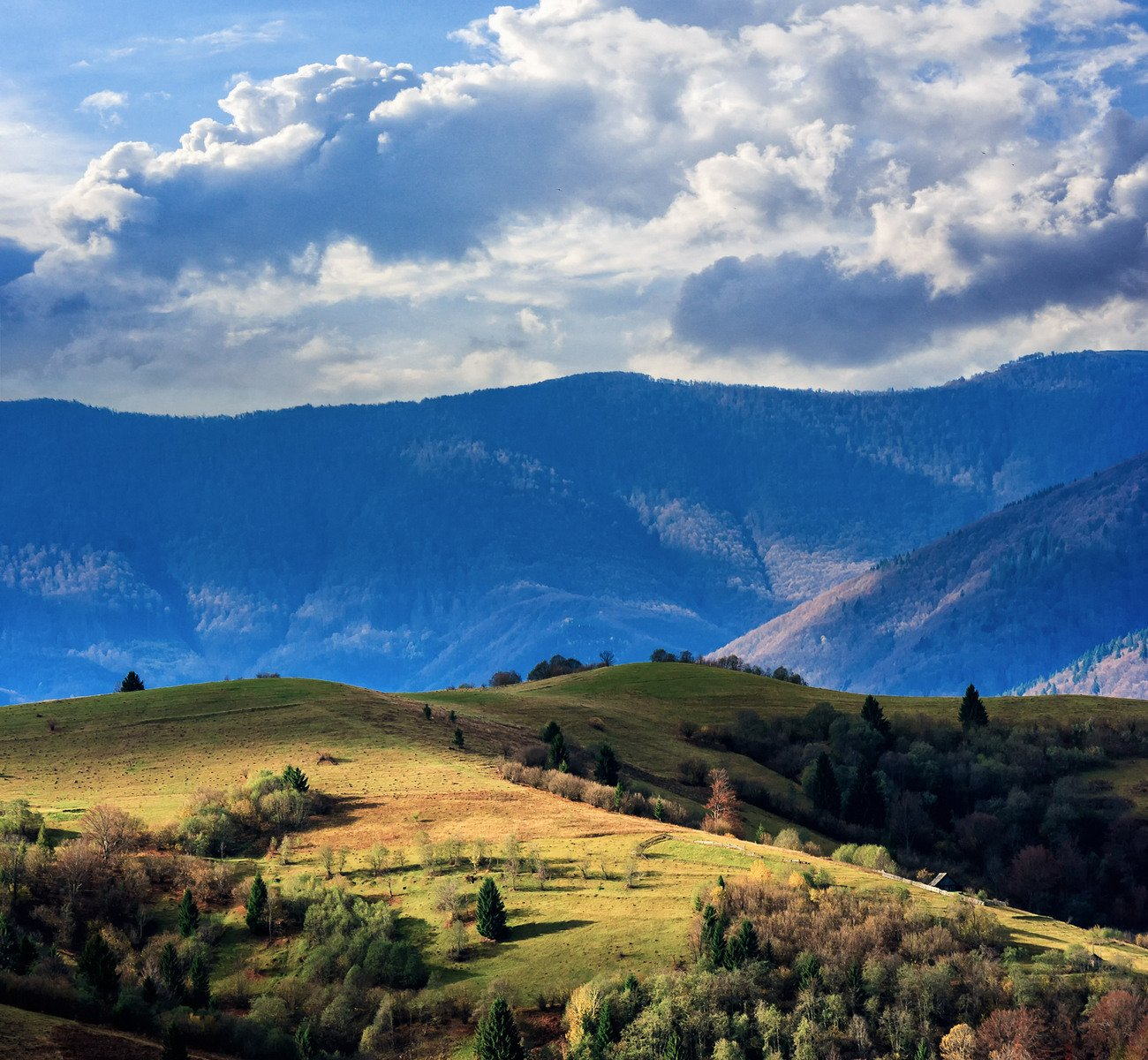 pine trees near valley in mountains on hillside, photo ...
