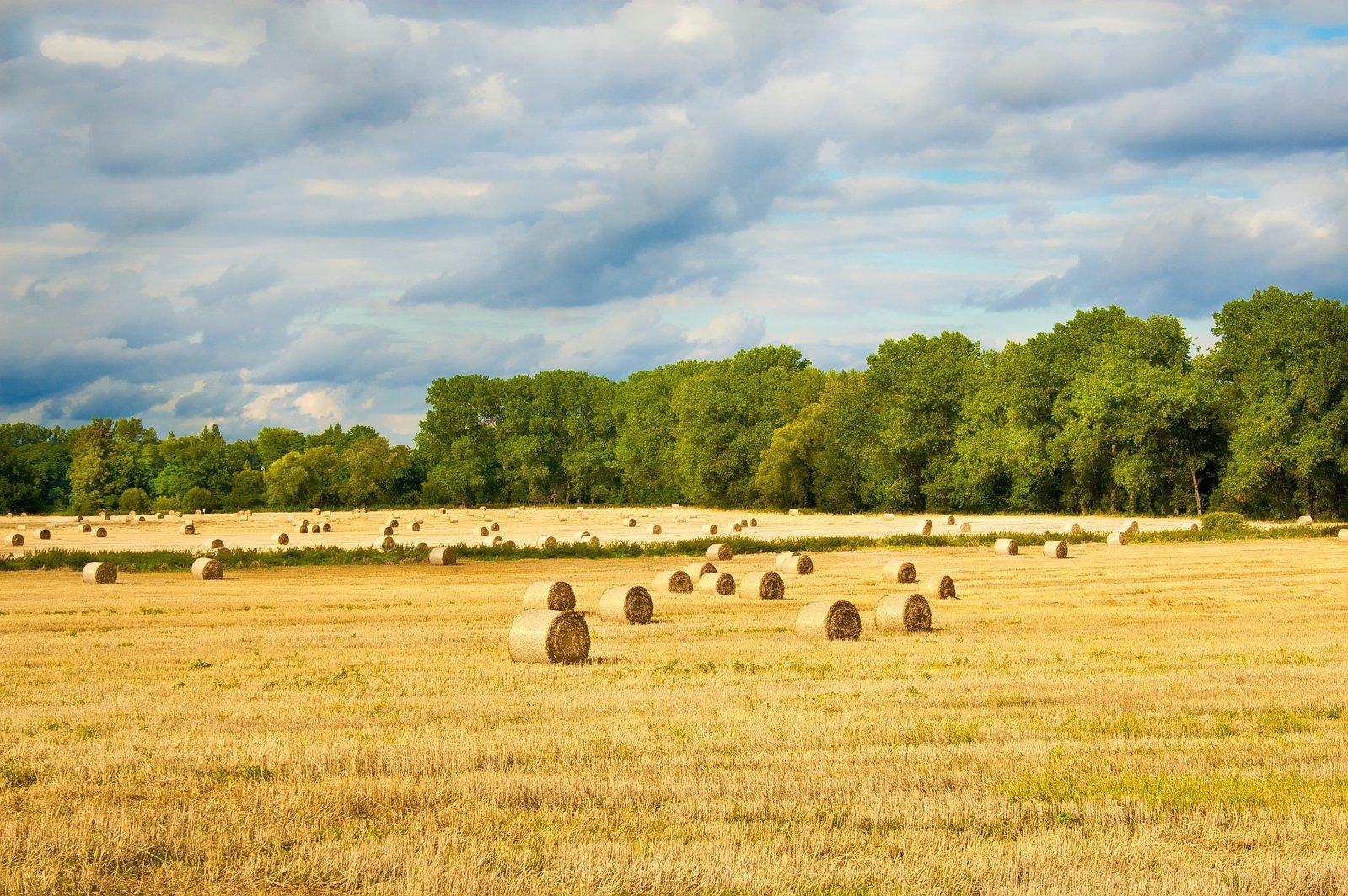 幼儿园学前绘画秋天的田野和树林