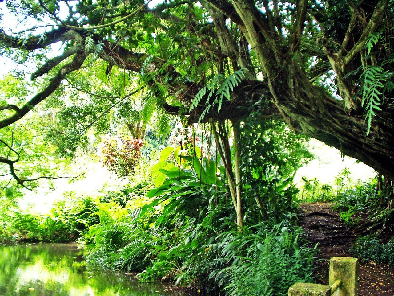 Edens garden 2
