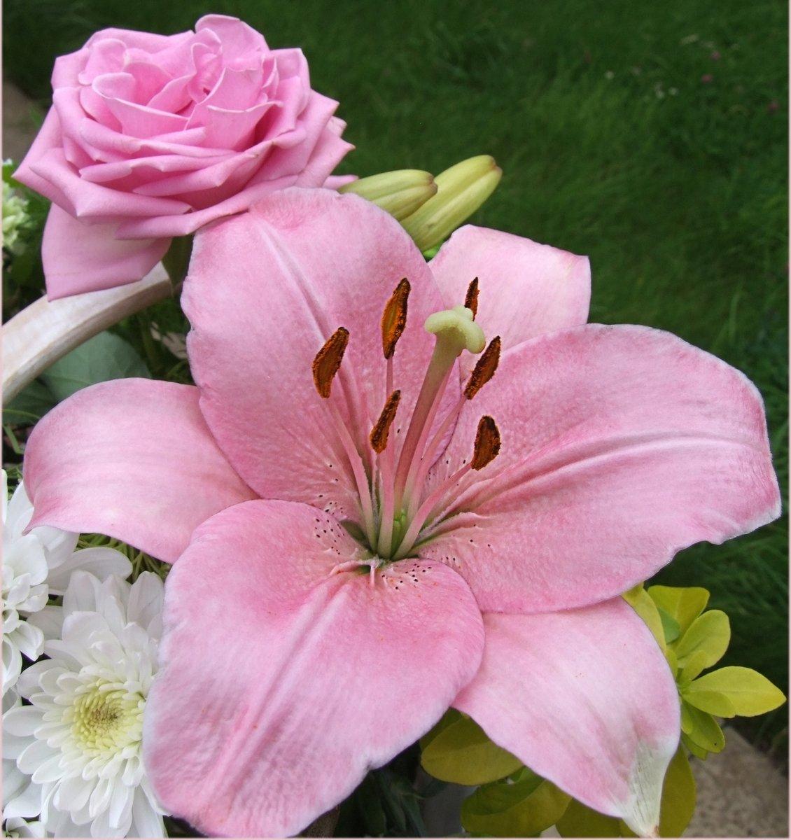 предыдущих лилии картинки розовые розы помощью, можно