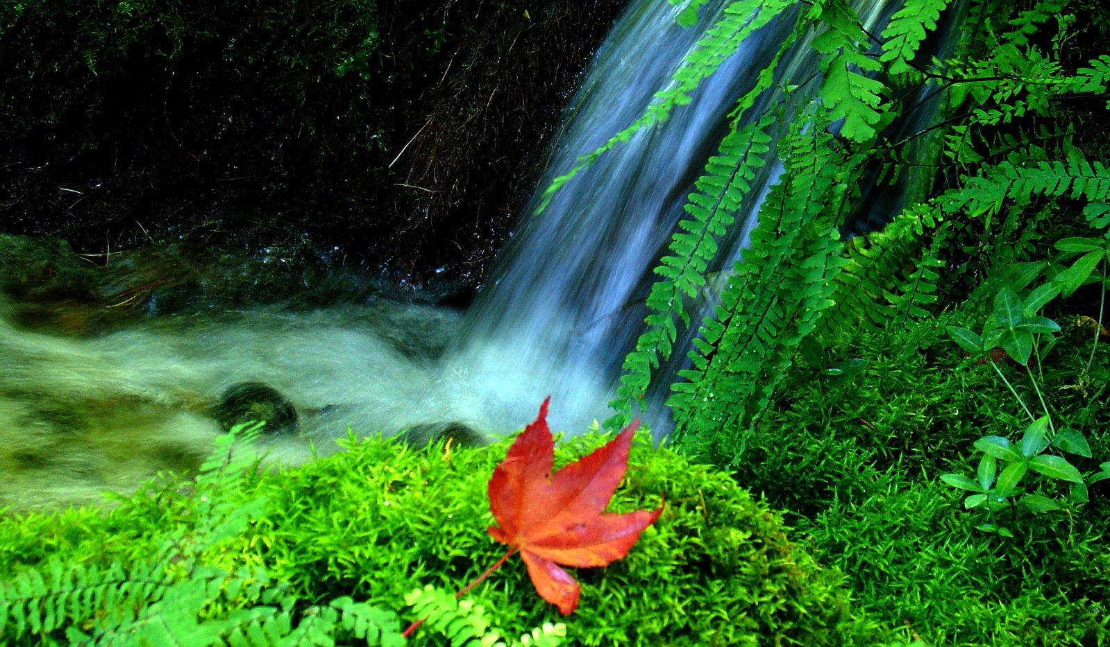Free WaterFall + Maple Leaf 2 Stock Photo