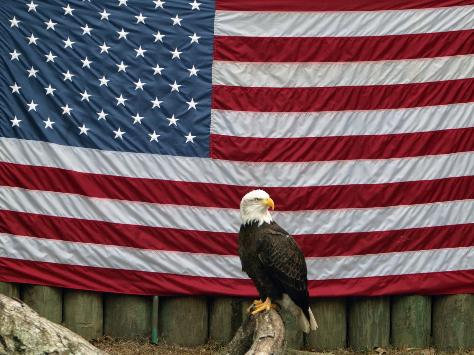 veteran eagle tim stanfill - HD1600×1200