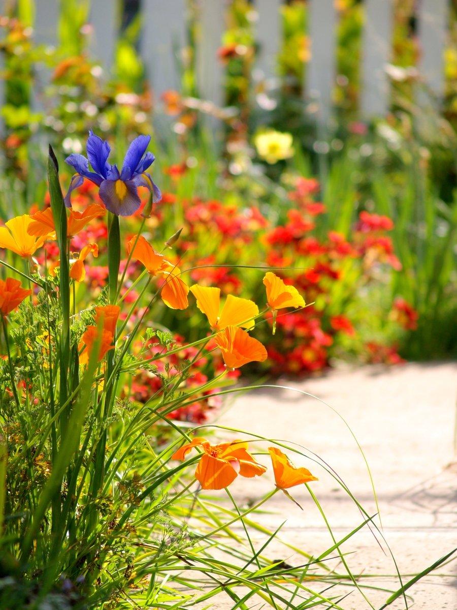 free 春天的花园 stock photo