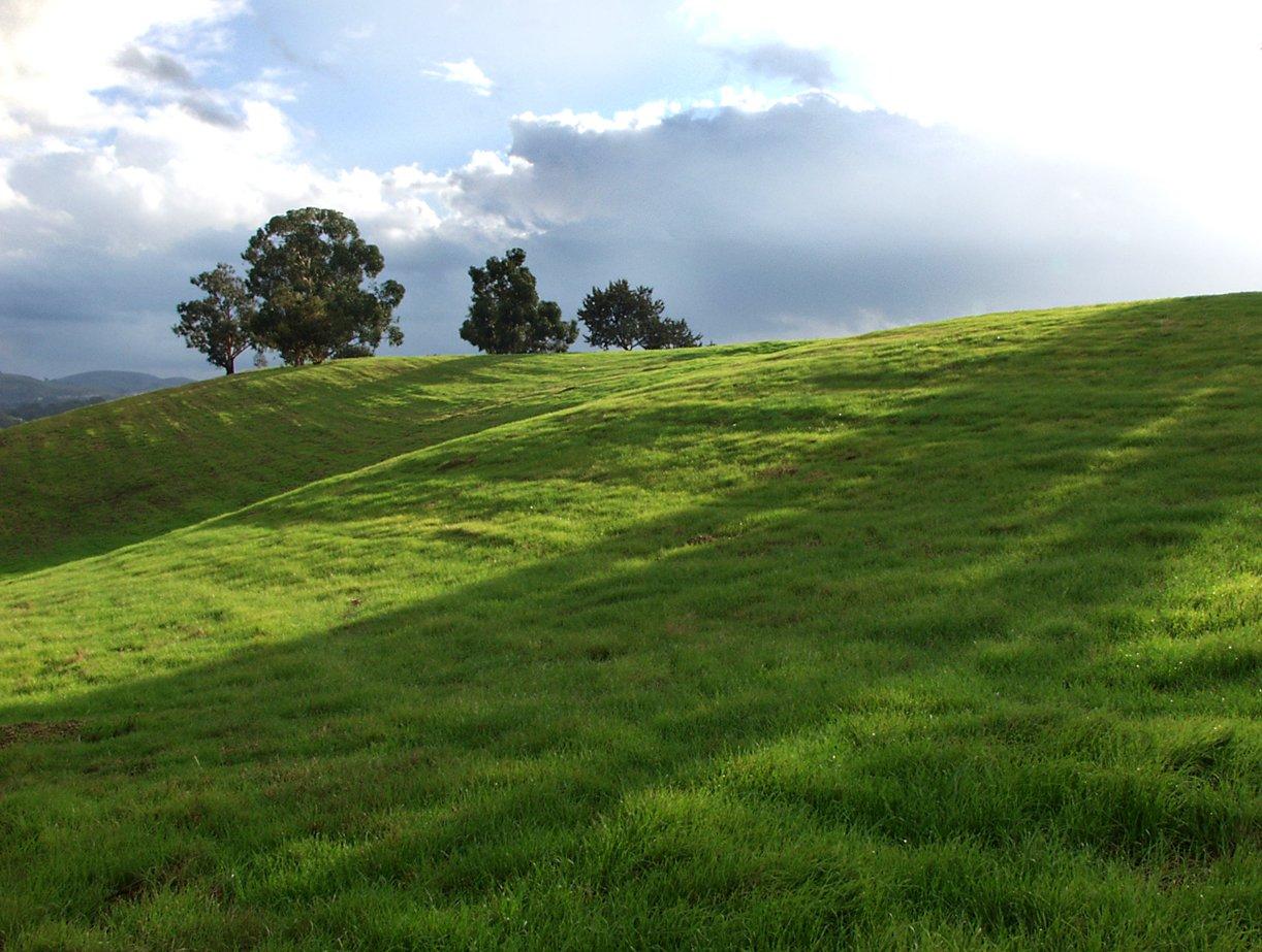 Free Green Fields 2 Stock Photo