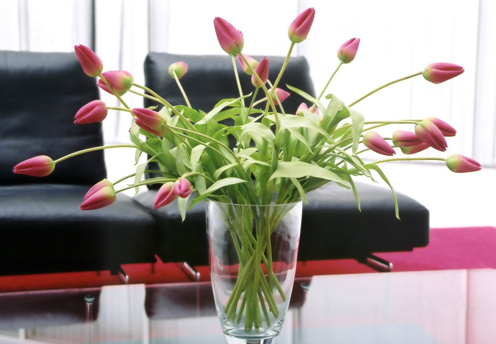Free flower vase images pictures and royalty free stock photos flowers waiting room reviewsmspy