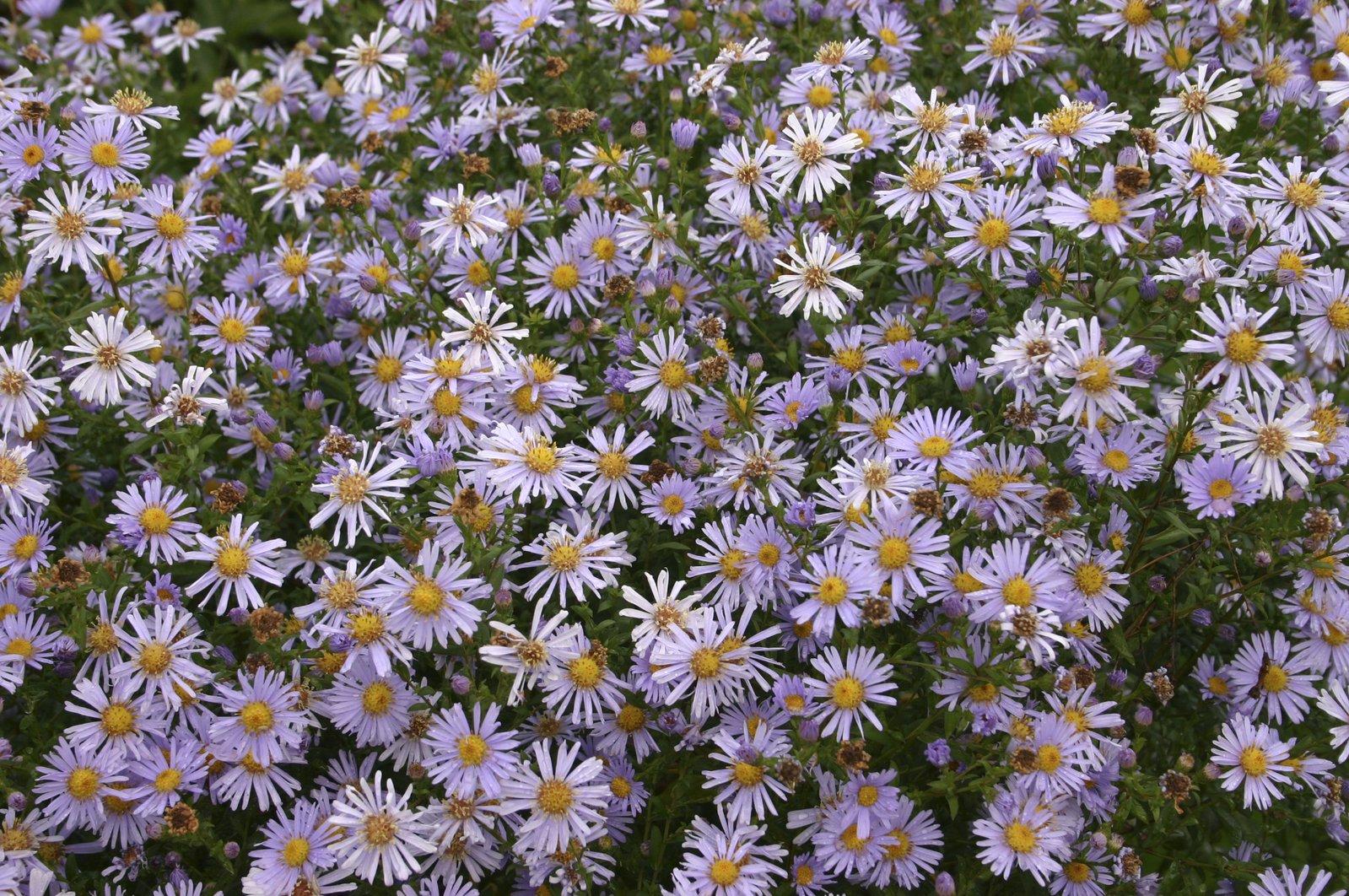 September Flower photo file Free