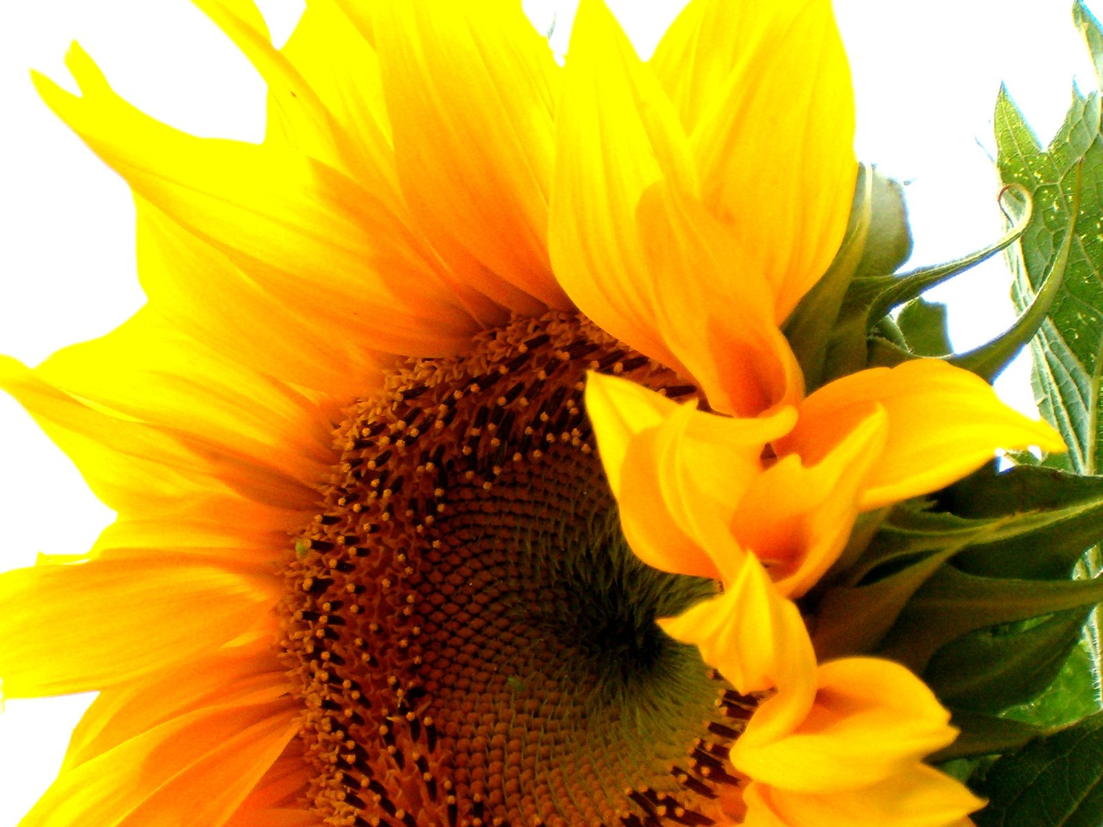 sunflower muslim singles Meet thousands of local singles in the sunflower, mississippi dating area today find your true love at matchmakercom.