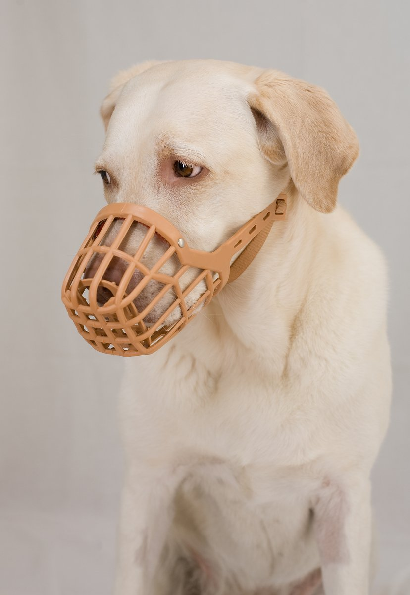 Free Muzzled Stock Photo Freeimages Com