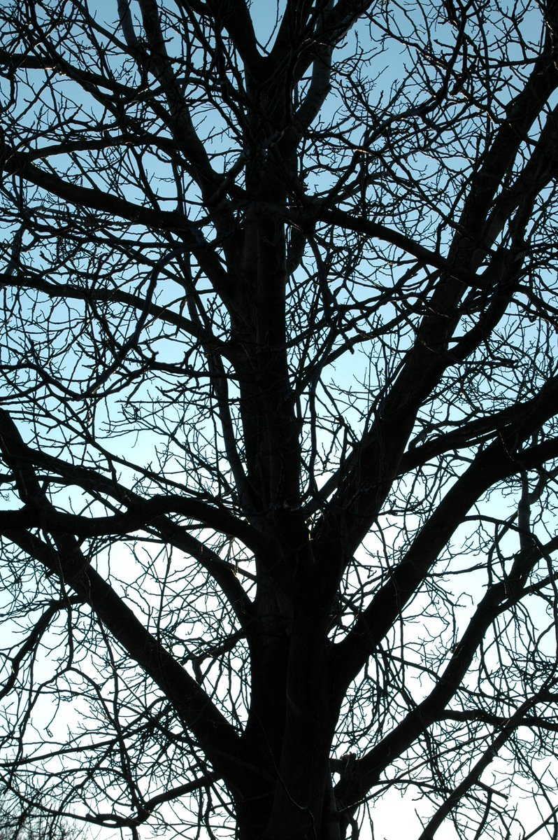 Free Tree Without Leaves Stock Photo Freeimages Com