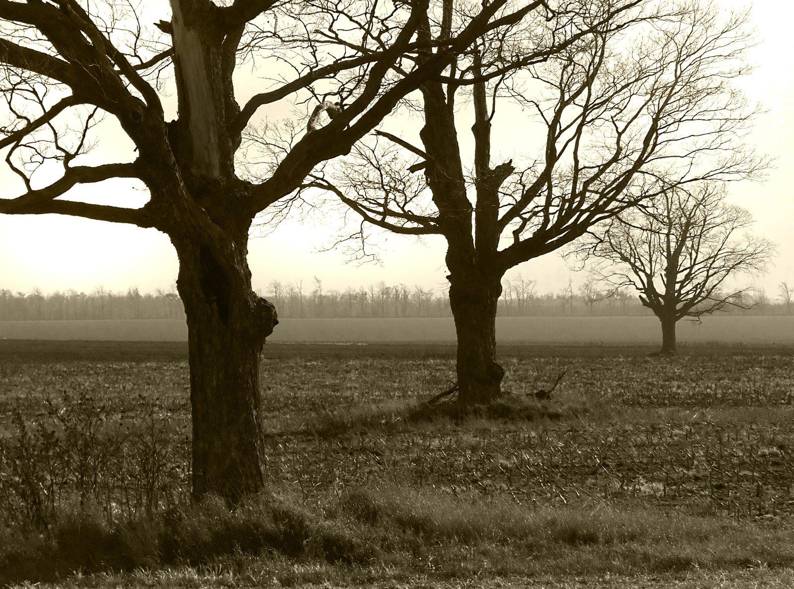 Free Barren Trees Stock Photo Freeimages Com