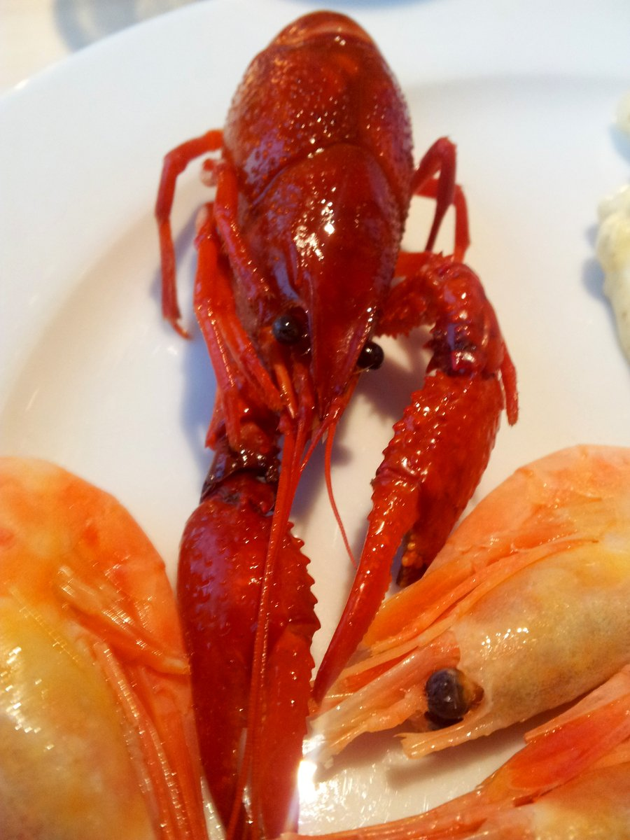 Free Mini Lobster Stock Photo Freeimages Com
