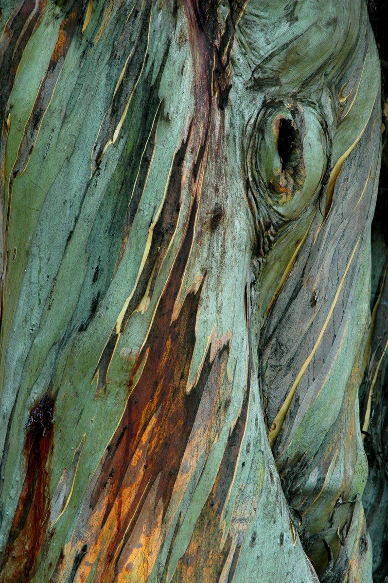 Australian bark