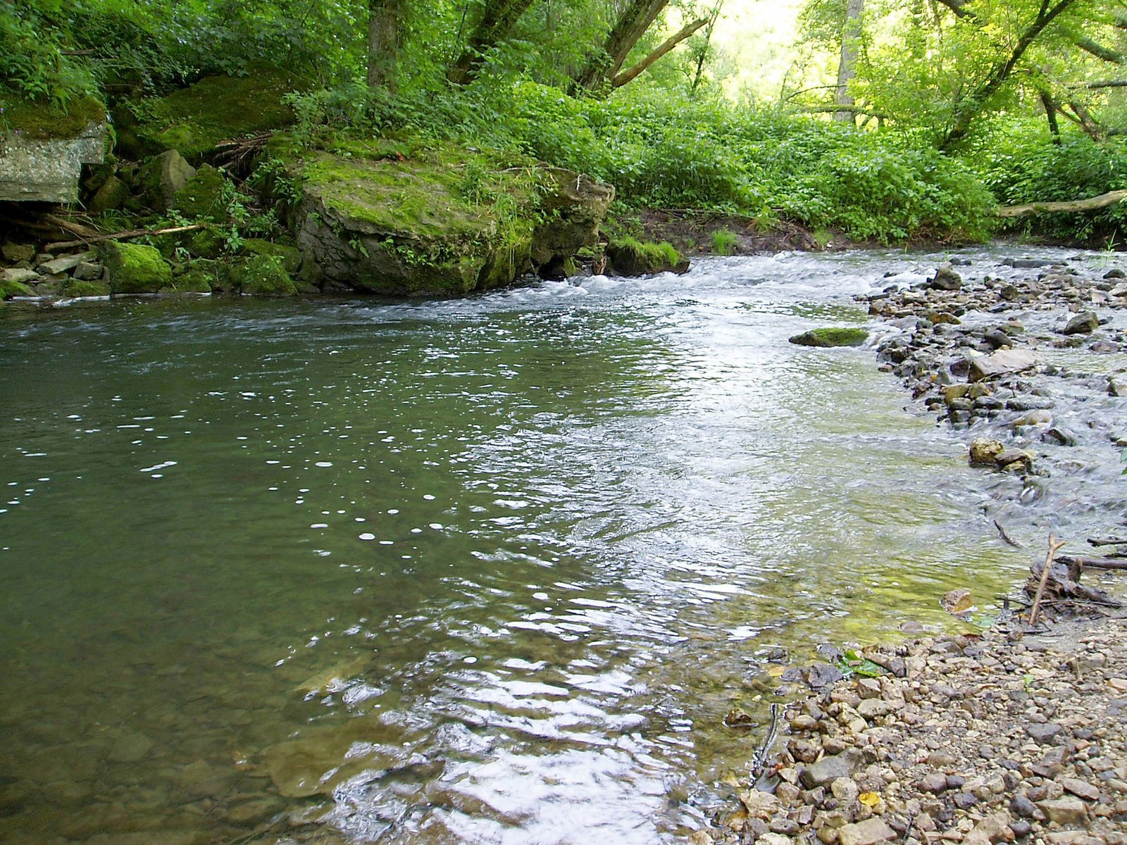Free trout stream stock photo for Fish and stream