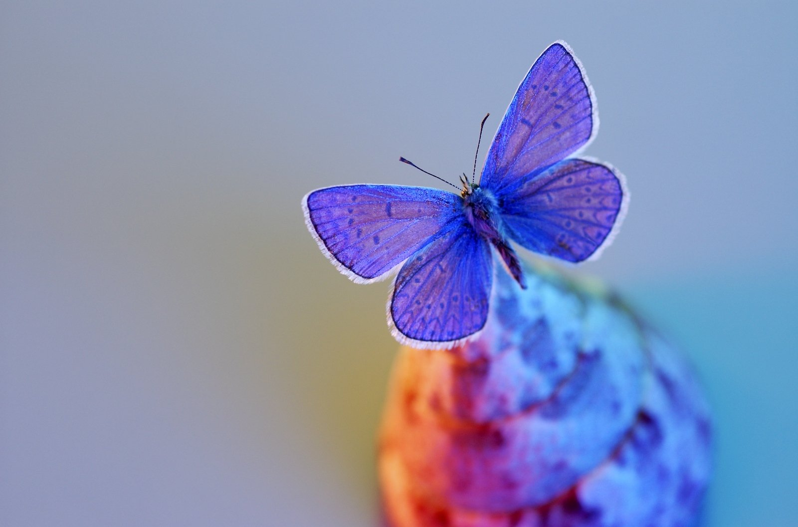 free butterfly stock photo freeimages com