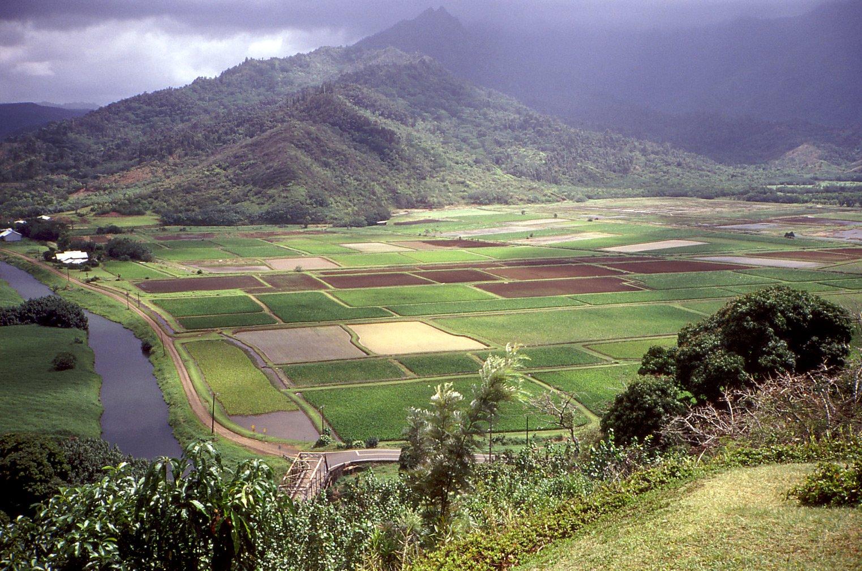 Hanalei Hawaii 1402205 on Farm Animals Activities