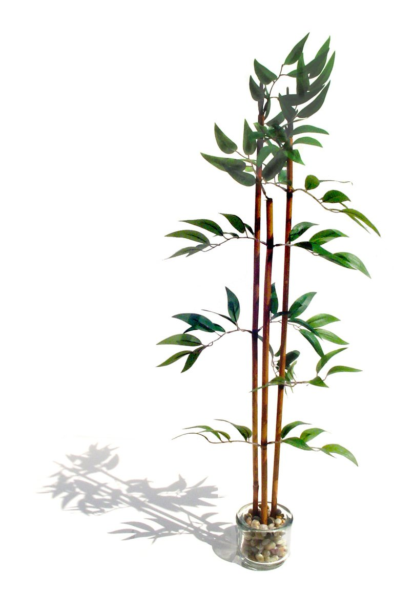Free faux bamboo stock photo for Faux bambou plante