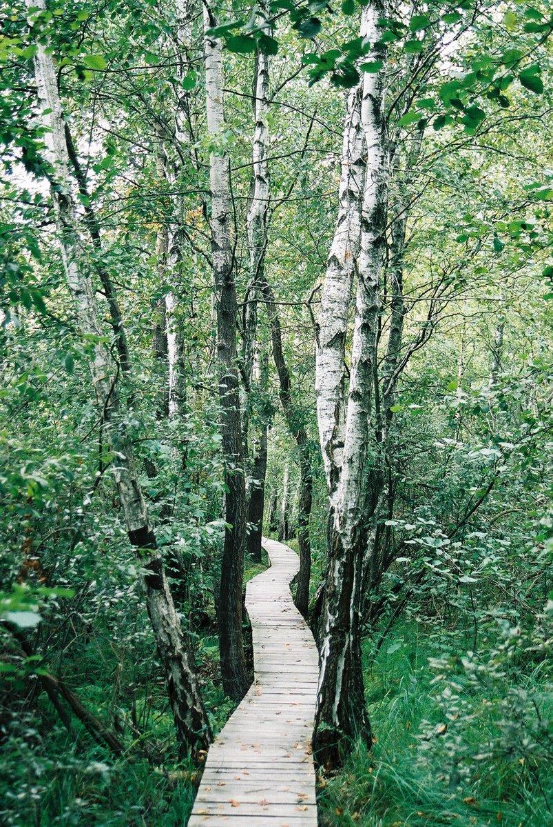 a-path-to-follow-1161111.jpg