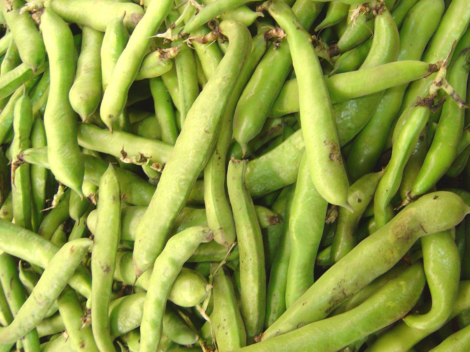 free produce fava bean stock photo freeimagescom