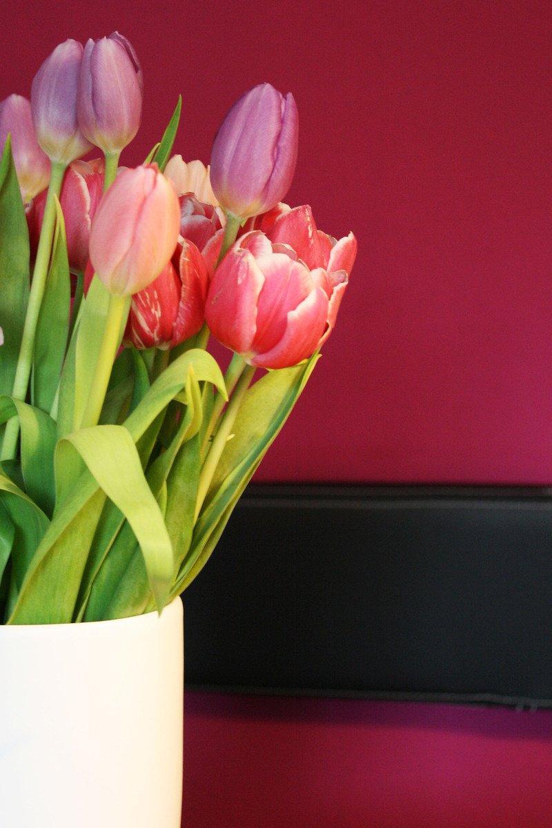 purple tulips 5