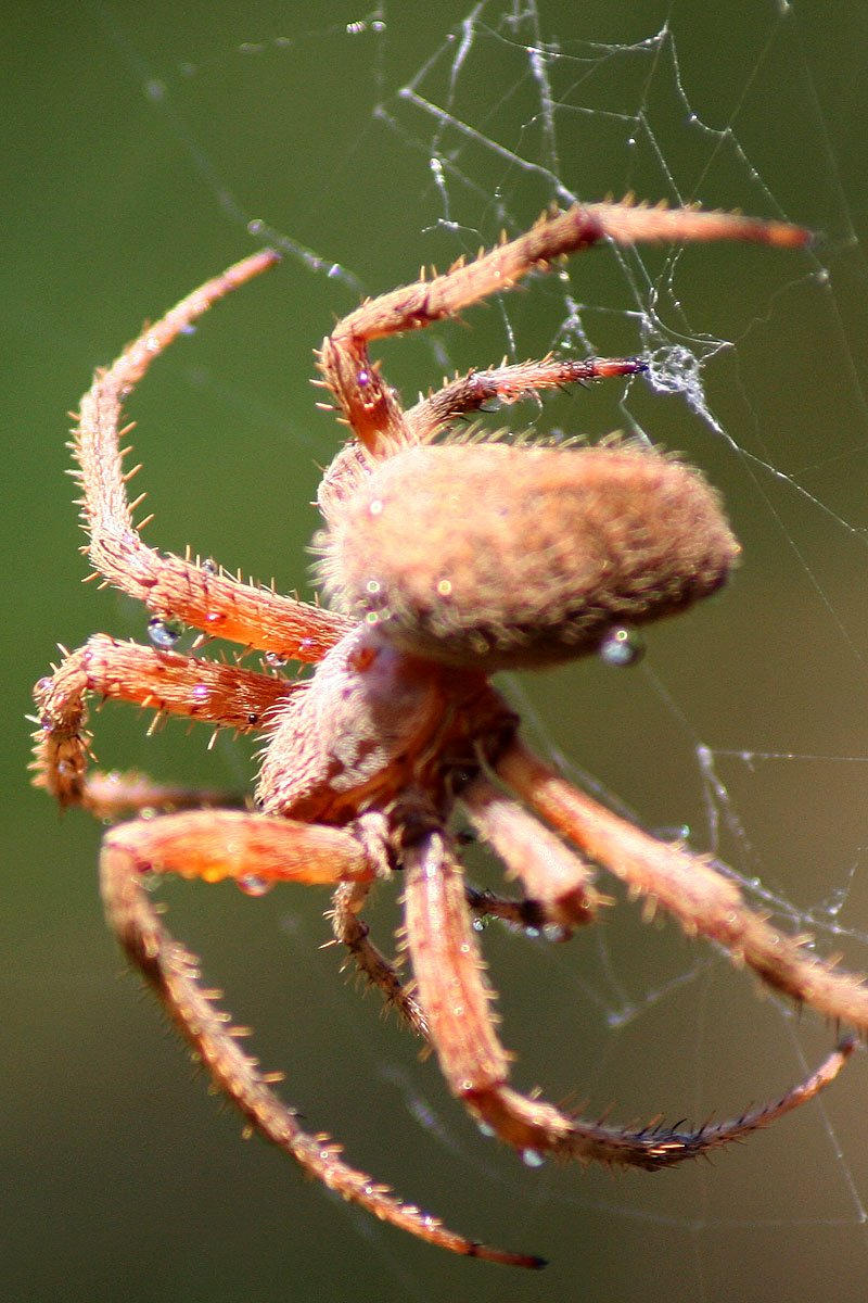 Free Spiders Galore 1 Stock Photo Freeimages Com