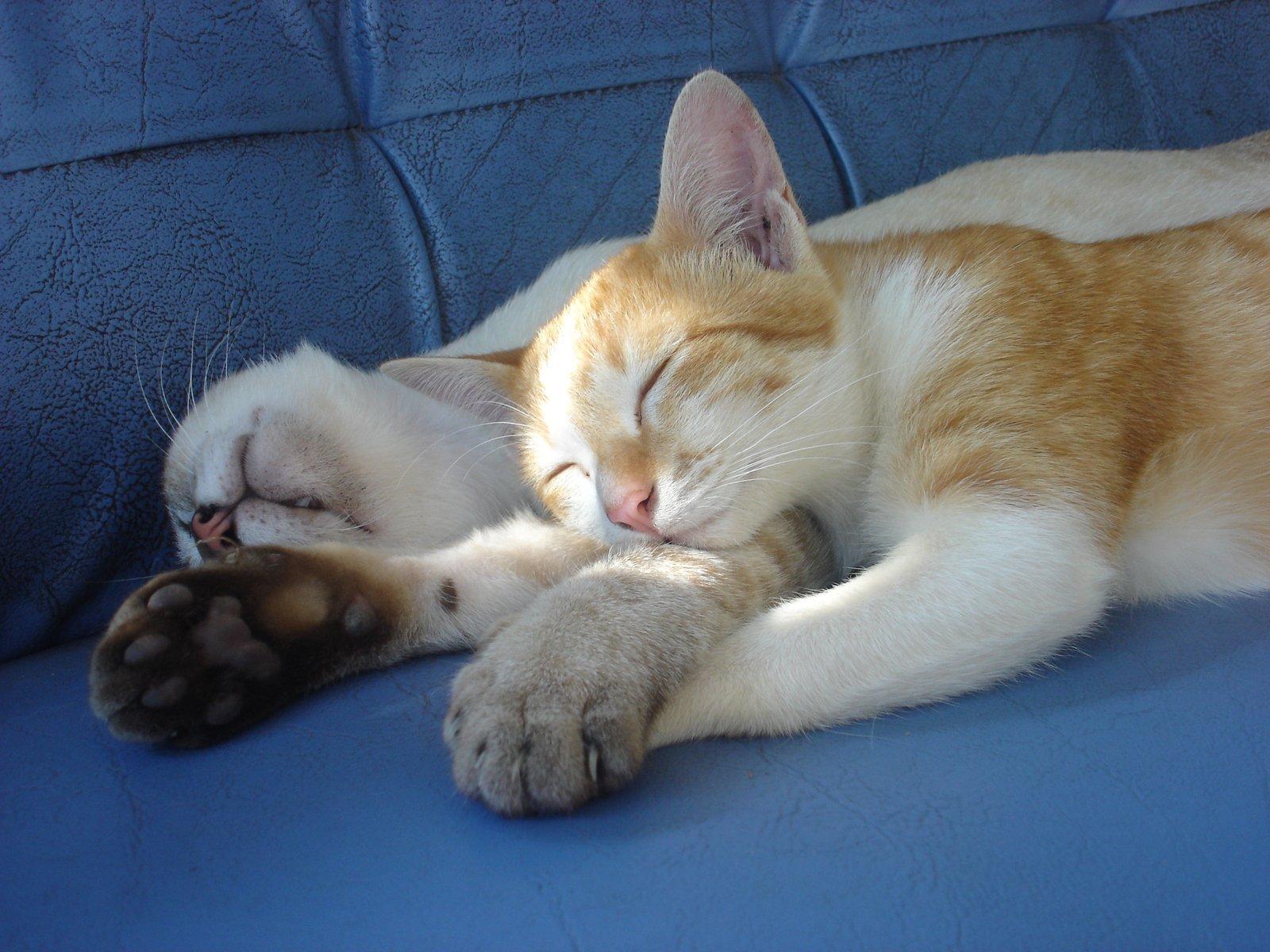 довольно маленький, фото кошек когда спят ткани