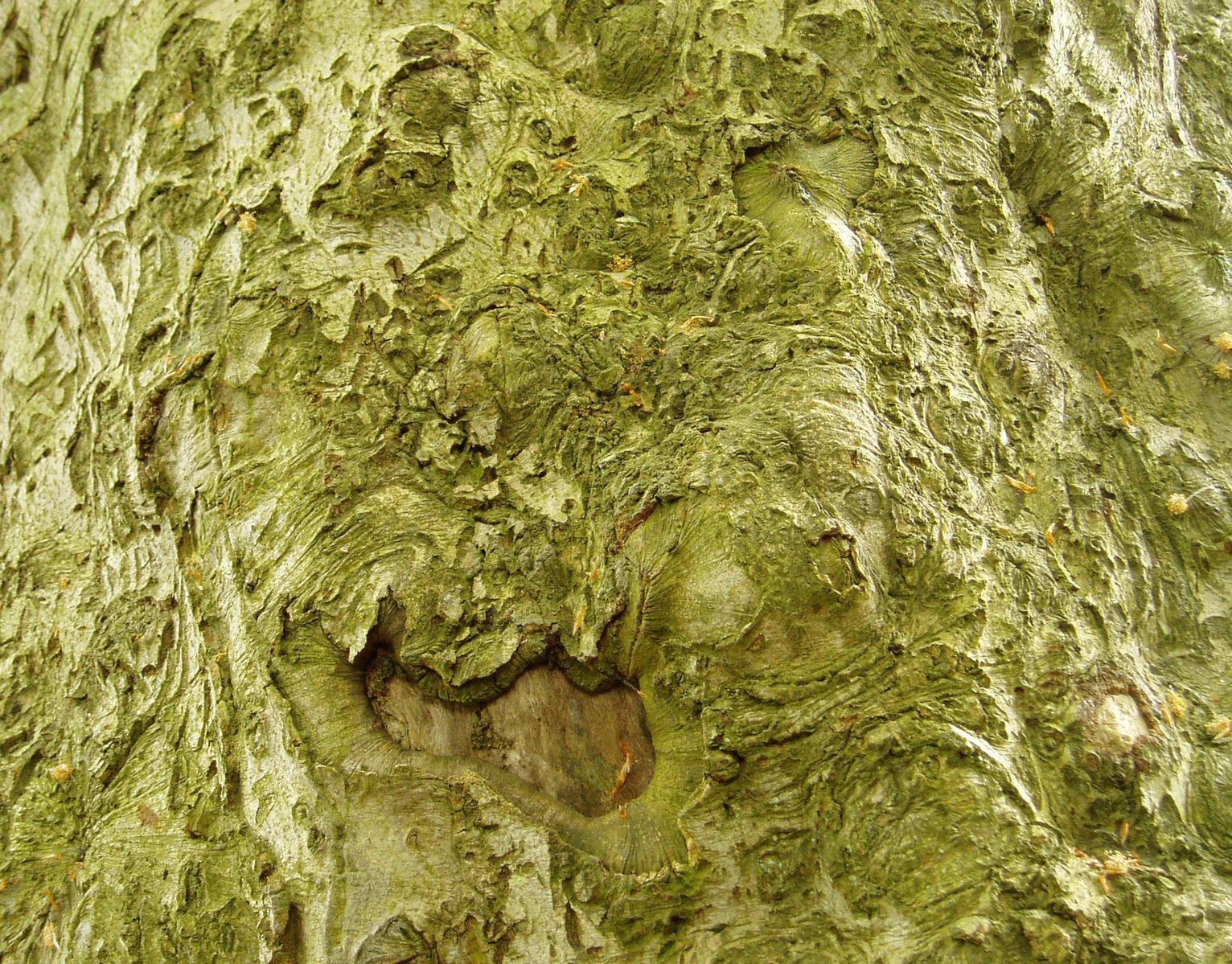 Free Anatomía del árbol 3 Stock Photo - FreeImages.com