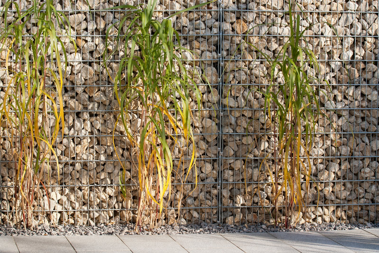 Reed and Gabion Wall