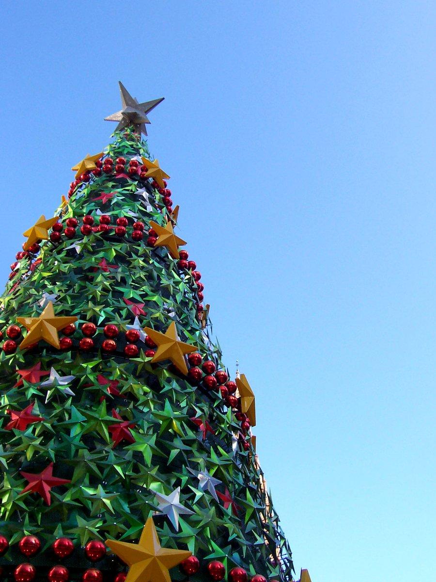 melbourne christmas tree farm plumpton vic