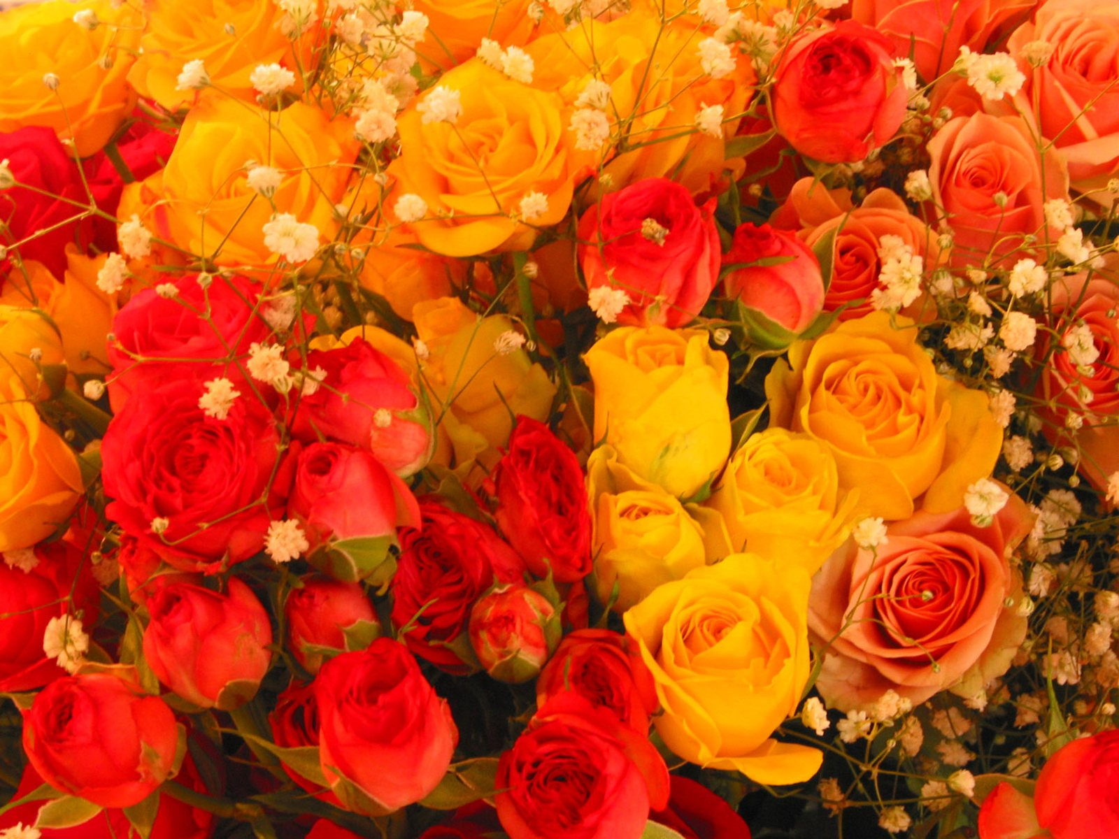 Free Rosas Amarelas E Vermelhas Stock Photo Freeimagescom