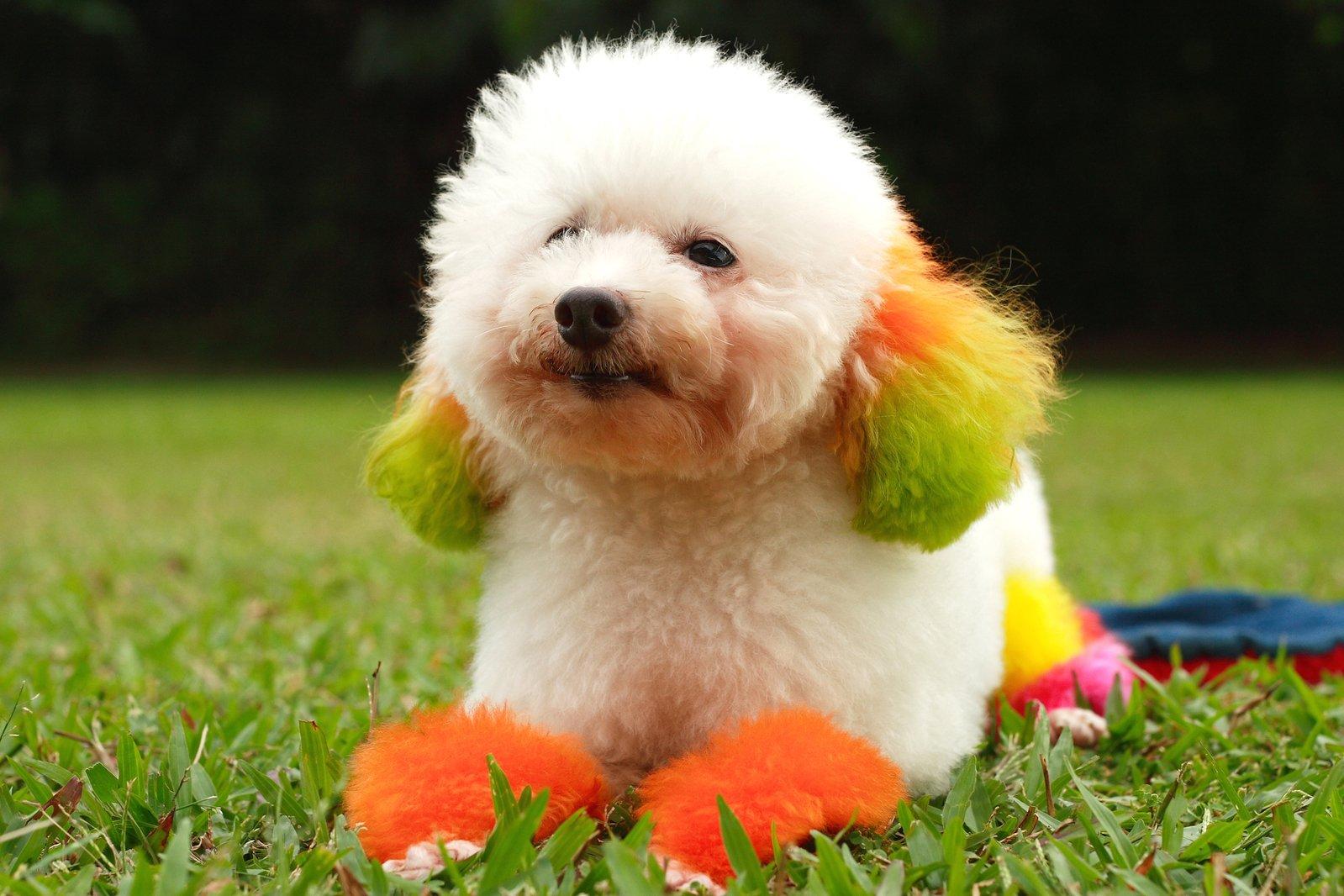 狗怀孕b图_3kb登入并下载新增到我的最爱 tags 狗 宠物 可爱 b e u t 我 f u l