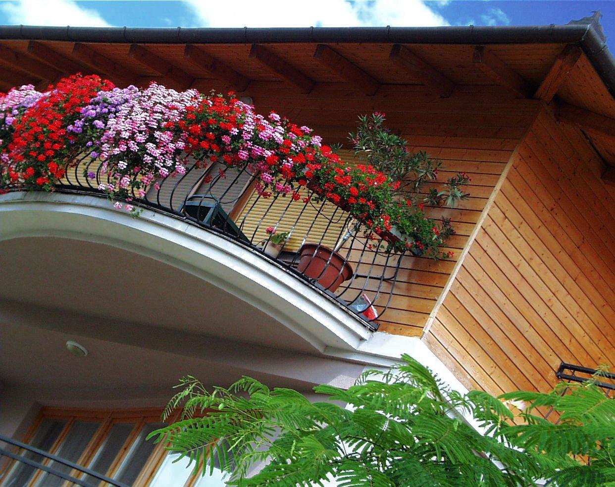Создать мемы балкон фото цветы 800x633 px.