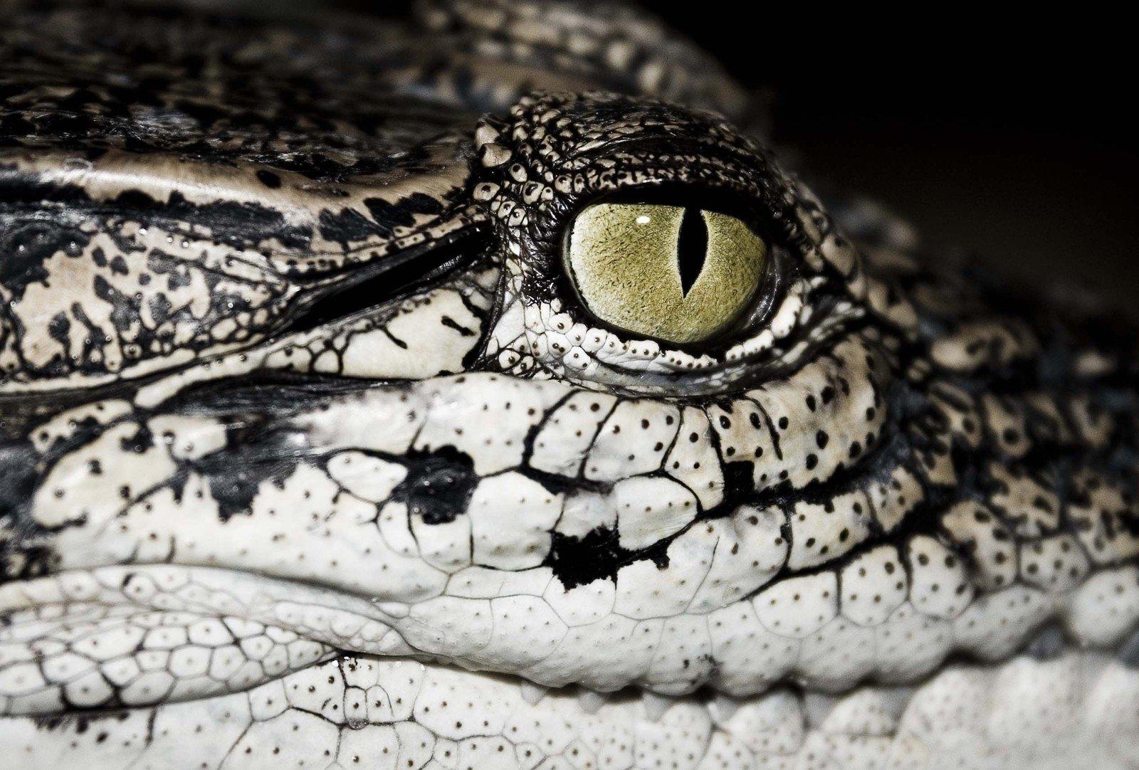 哈,蛇和鳄鱼图片.