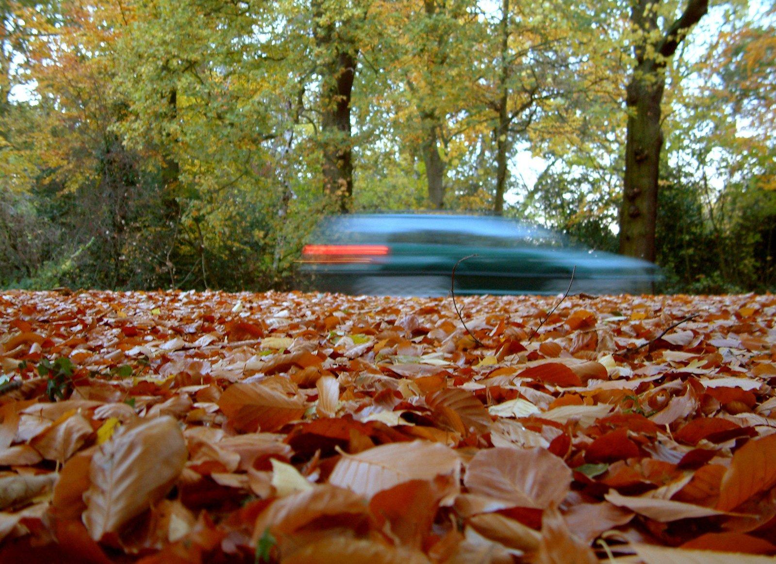 Blurred car in autumn leaves