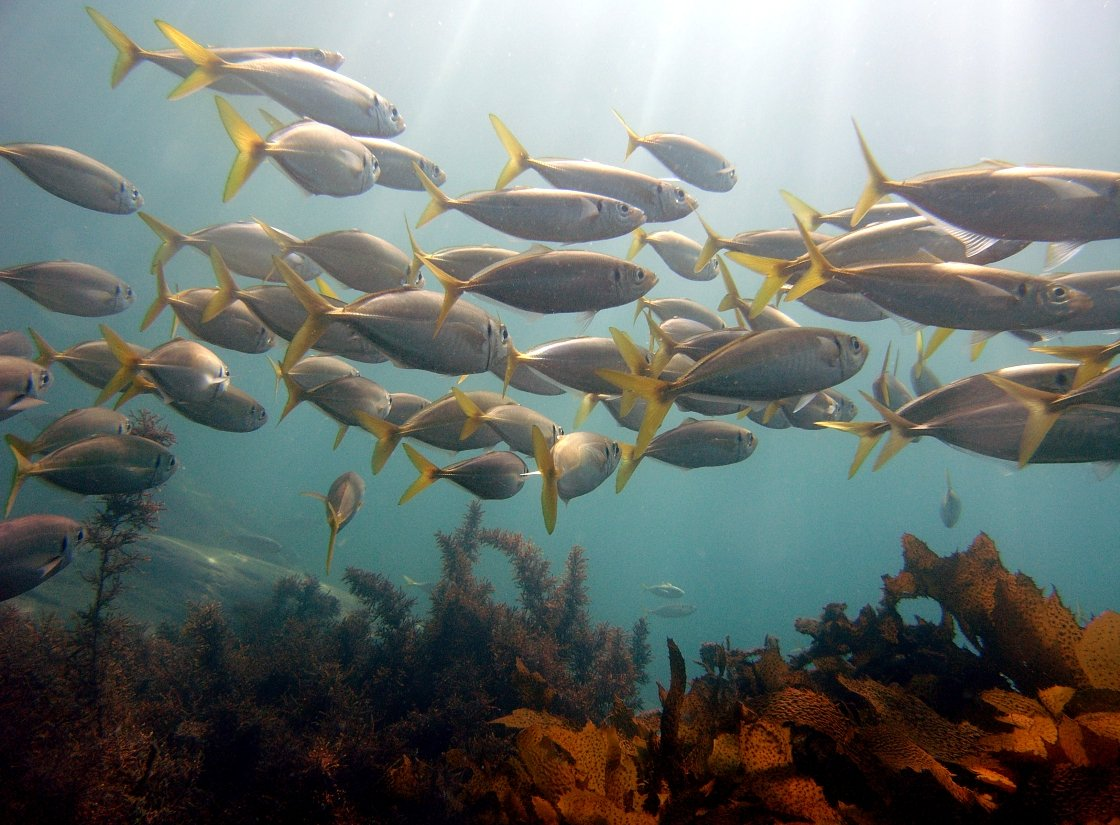 Free fish lots of fish pt 2 stock photo for Lots of fish