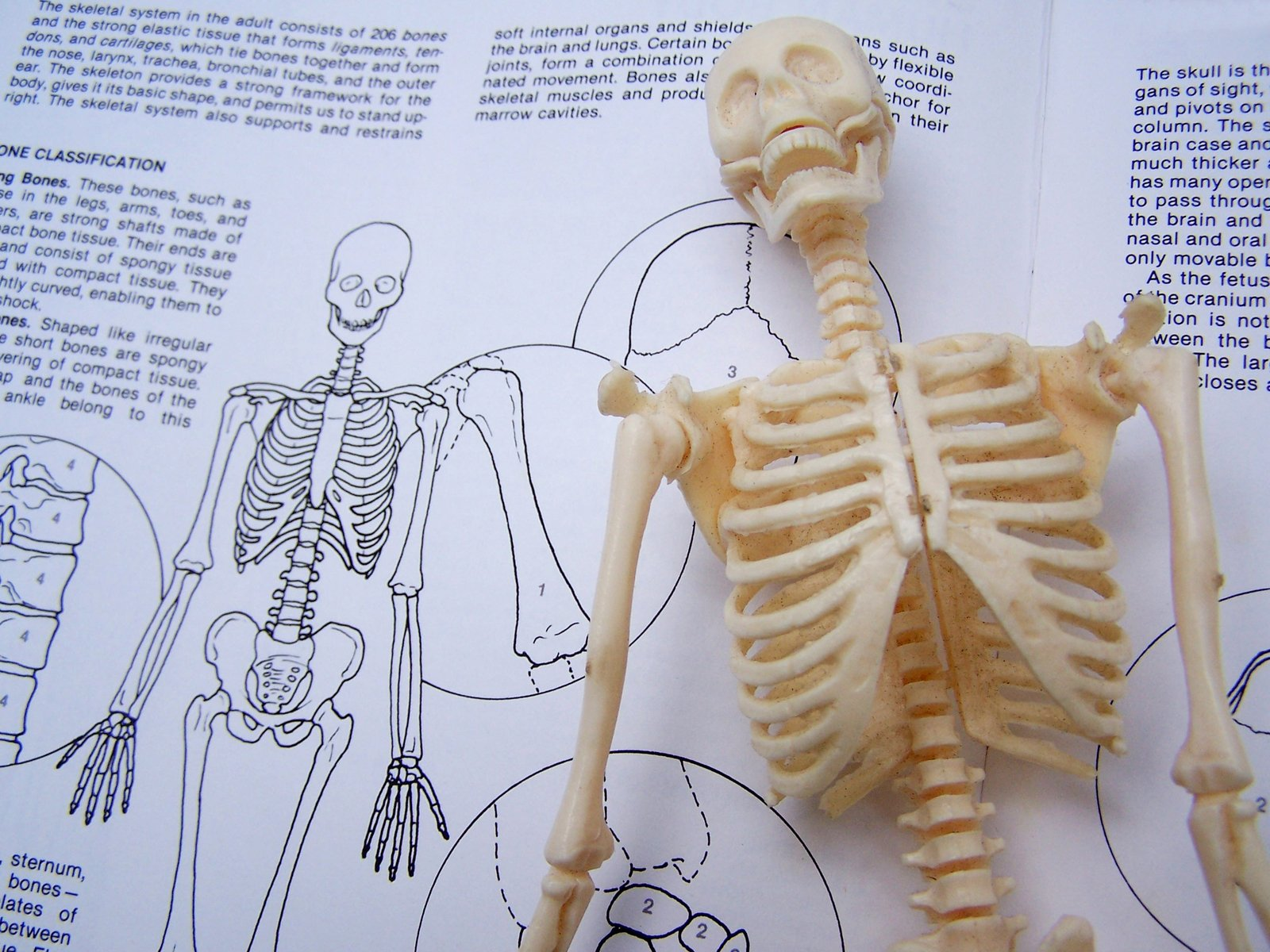 case study skeletal system