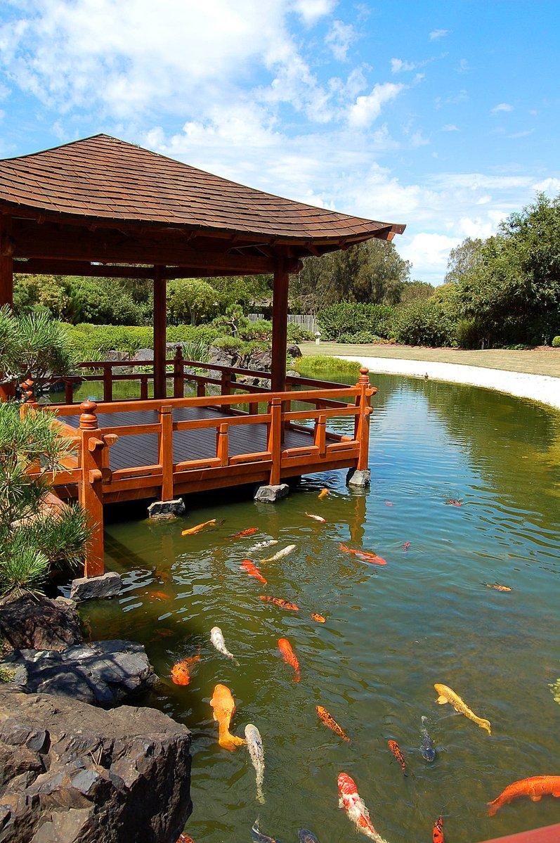 Free japanese garden koi stock photo for Koi japanese garden screensaver