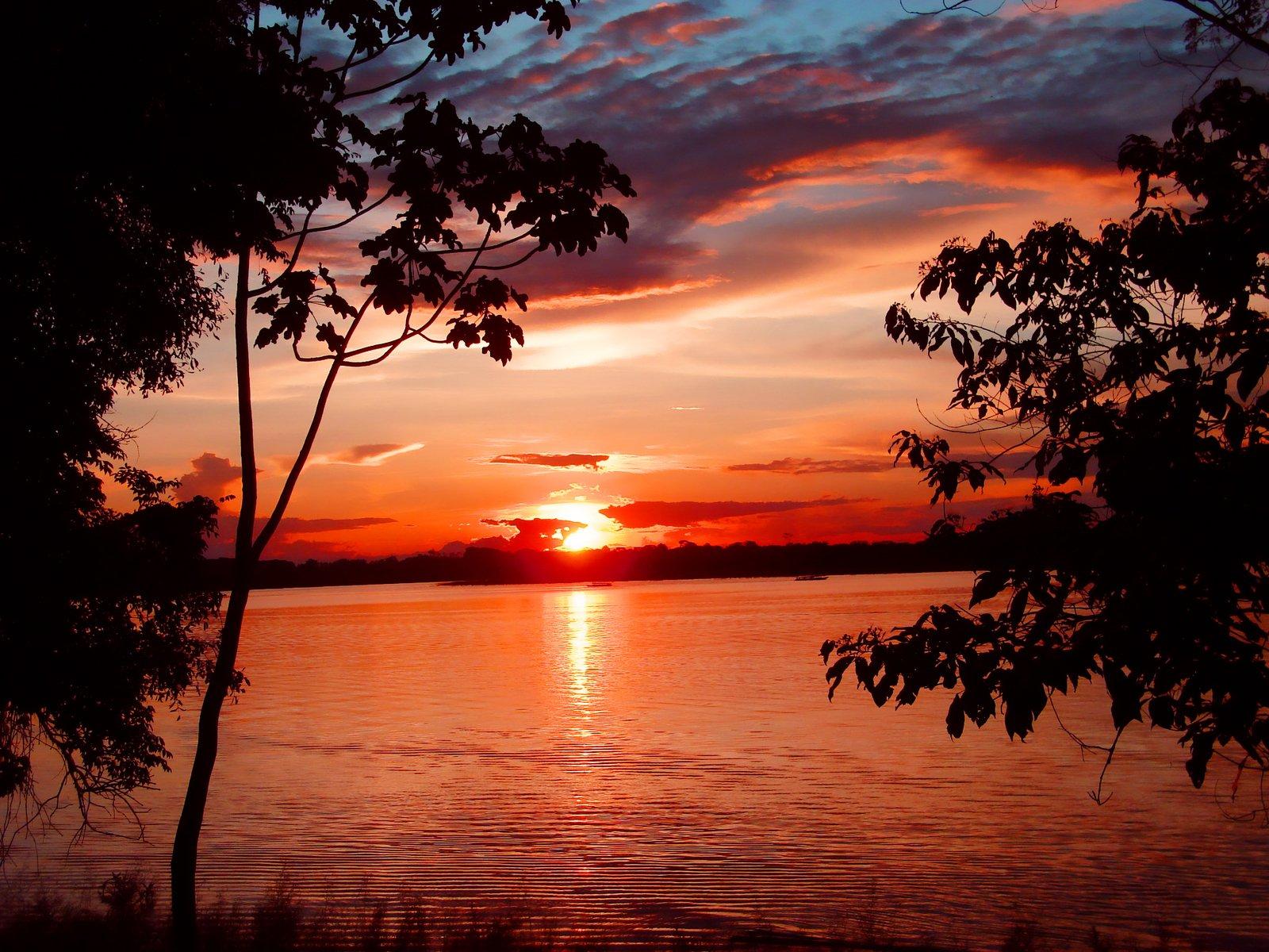 Free Sunset Jungle Stock Photo Freeimages Com