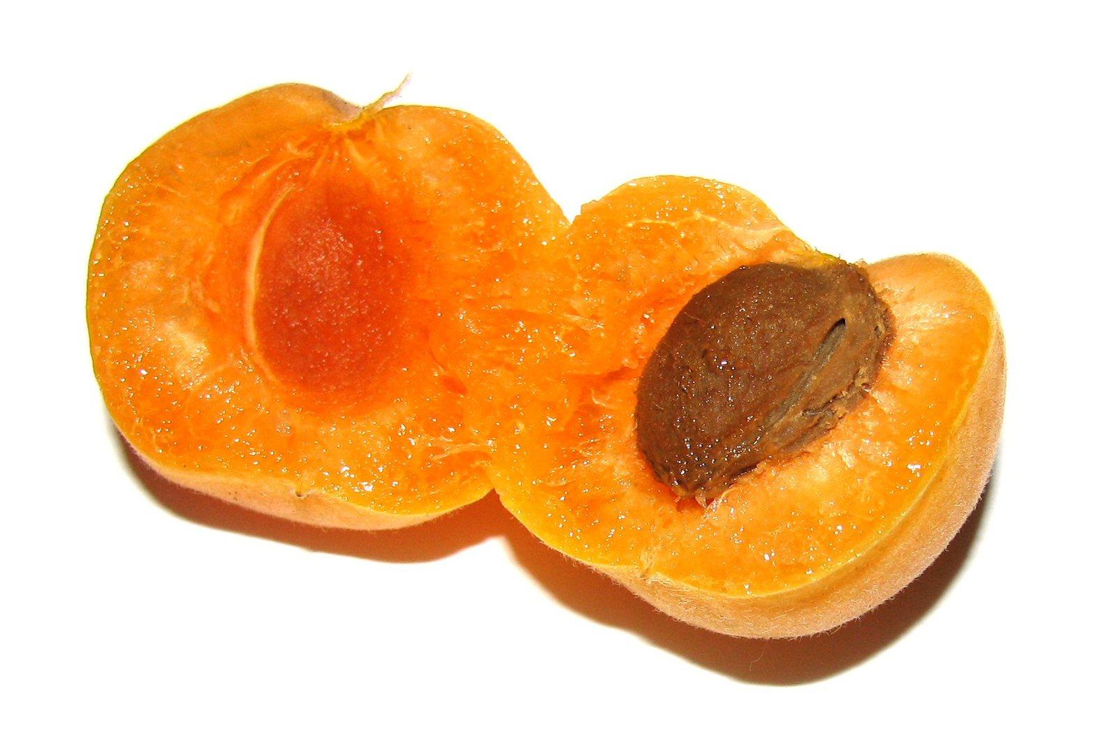 Как из косточки вырастить абрикос? Видео и пошаговая 34