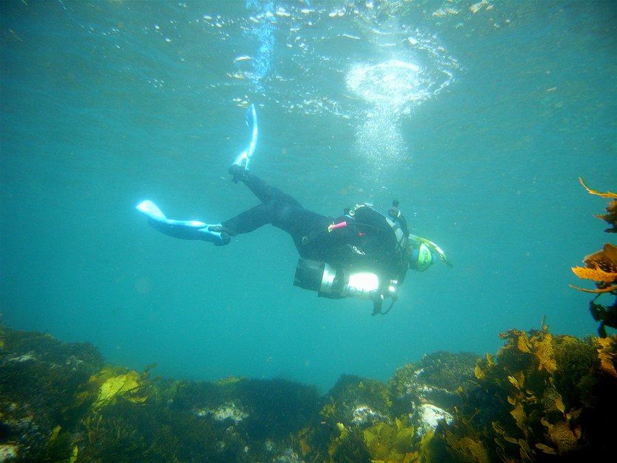 Diver,diver,diving,scuba