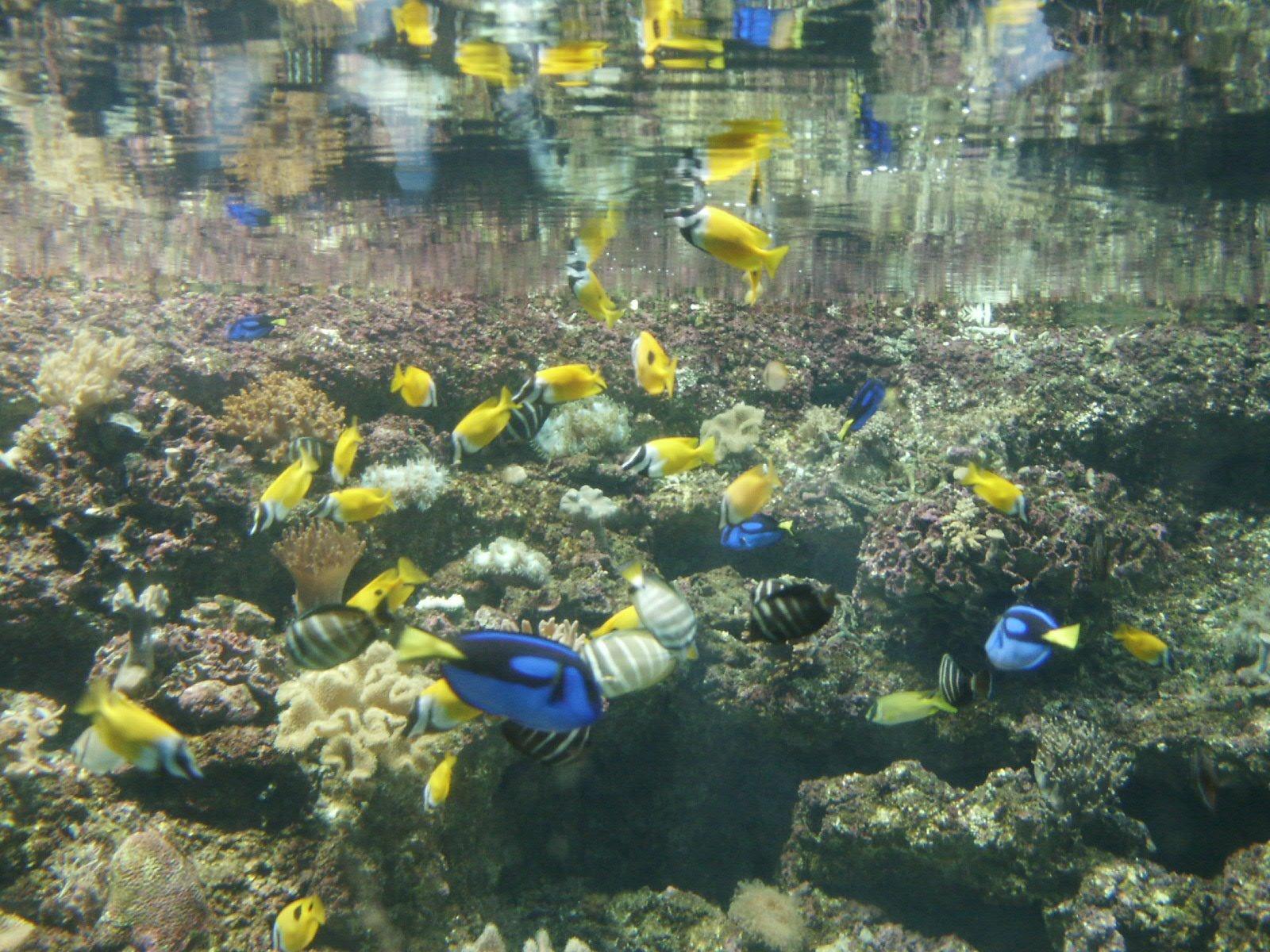 poissons en aquarium photos 1484155 freeimages