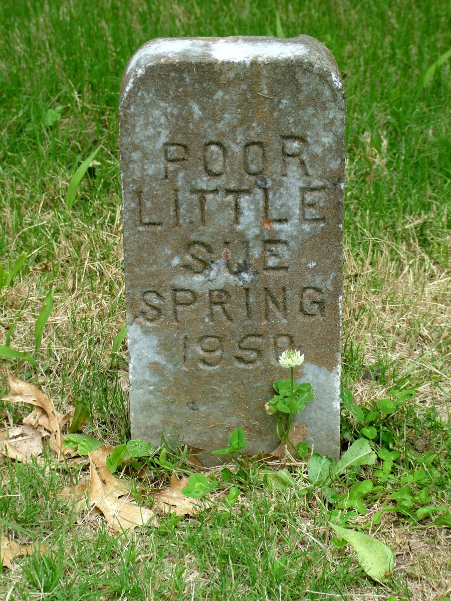 Free Poor Little Sue Spring Stock Photo Freeimages Com