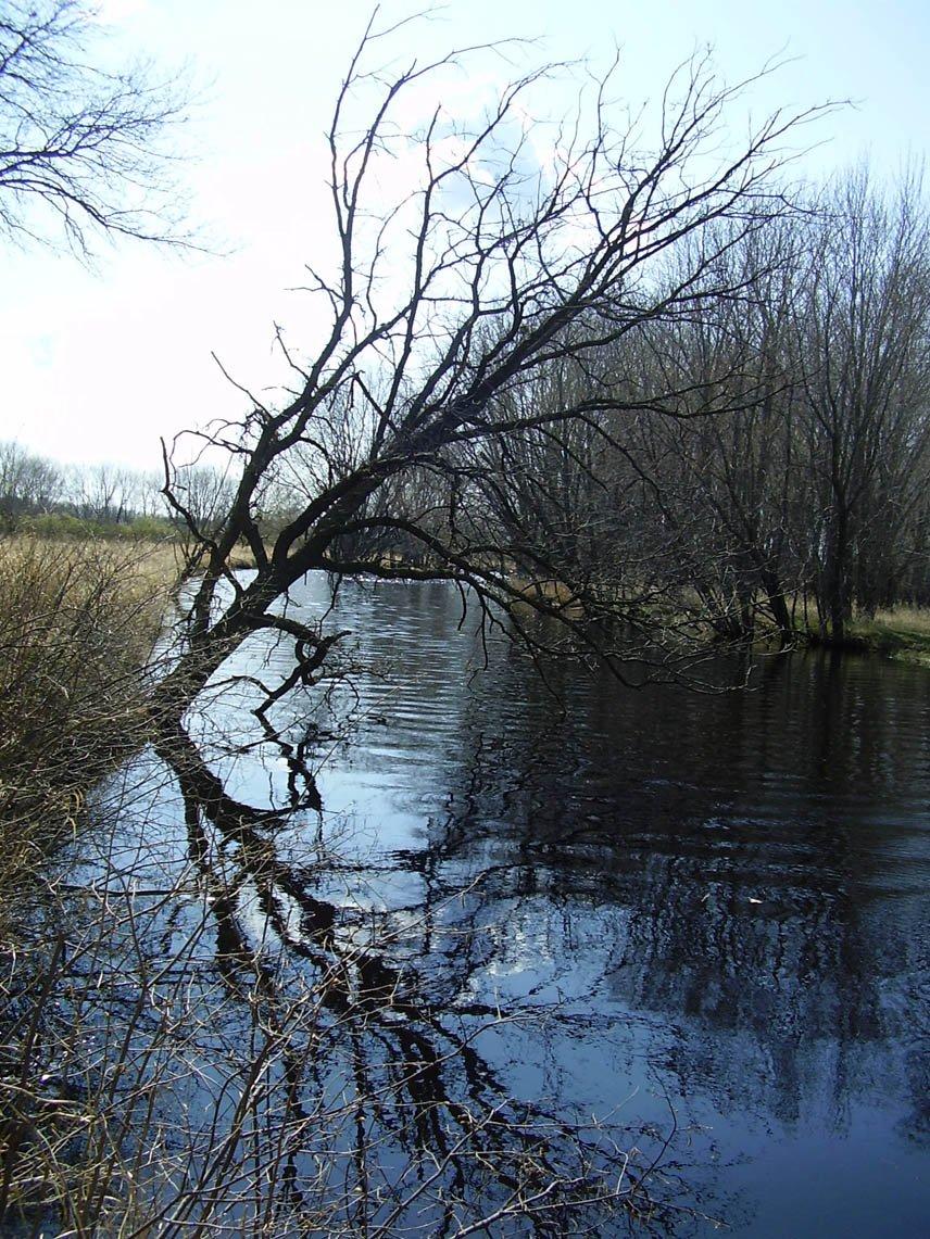 스컹크 강, photos, #1373572 - FreeImages.com