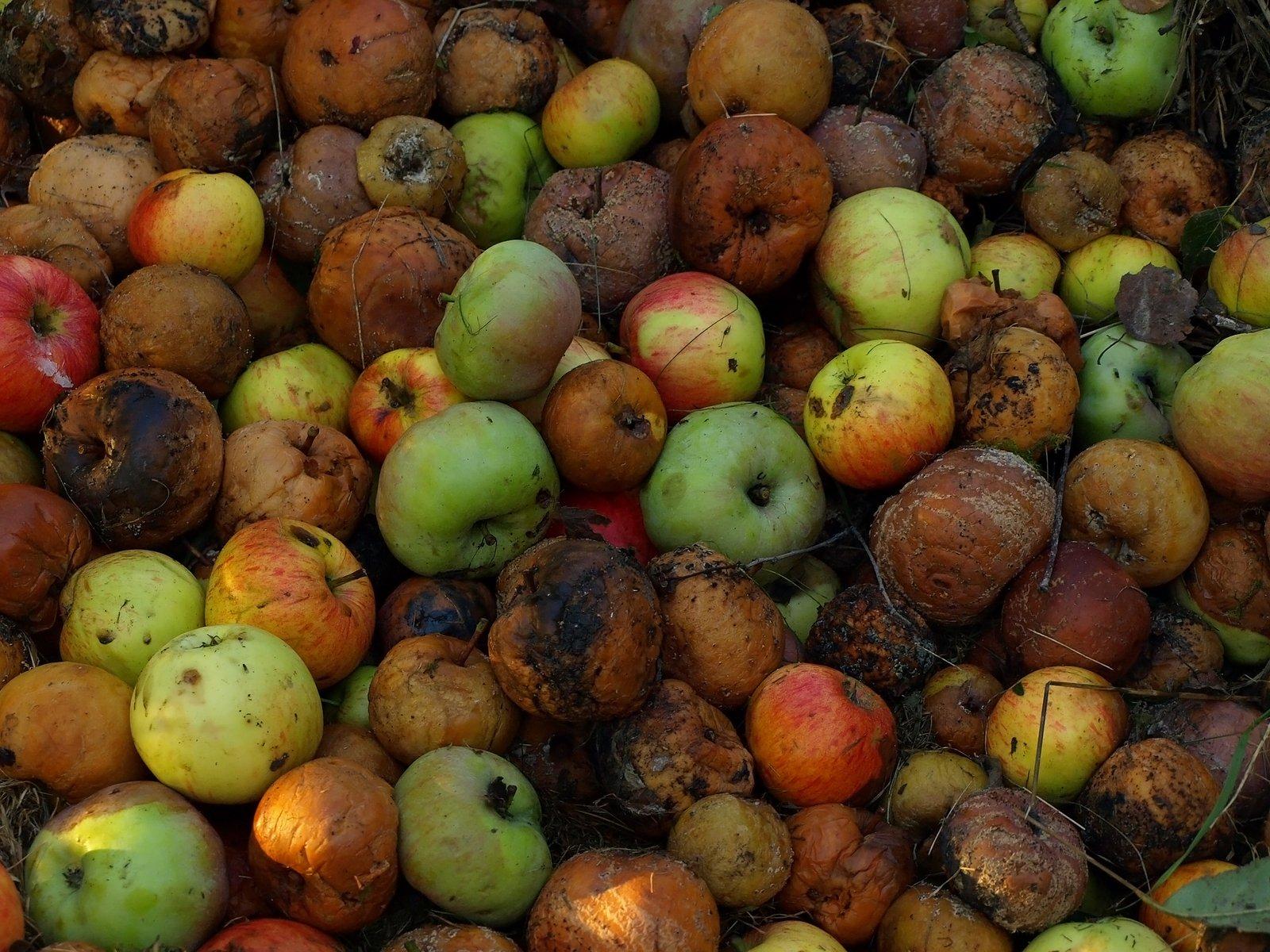 Frutas apodrecidas, amolecidas e com fungos