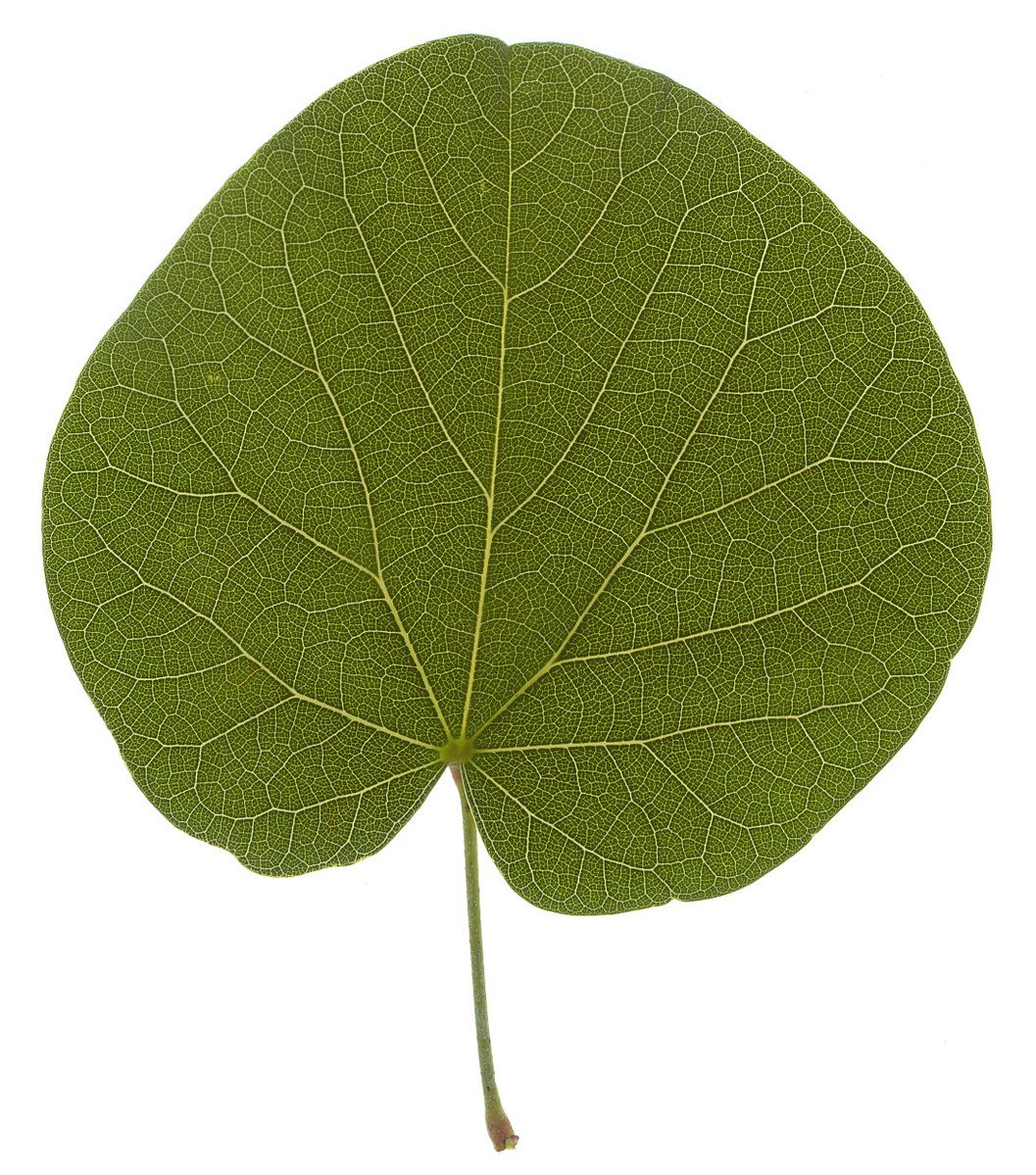 Free Leaf Texture Stock Photo Freeimages Com Almost files can be used for commercial. free leaf texture stock photo