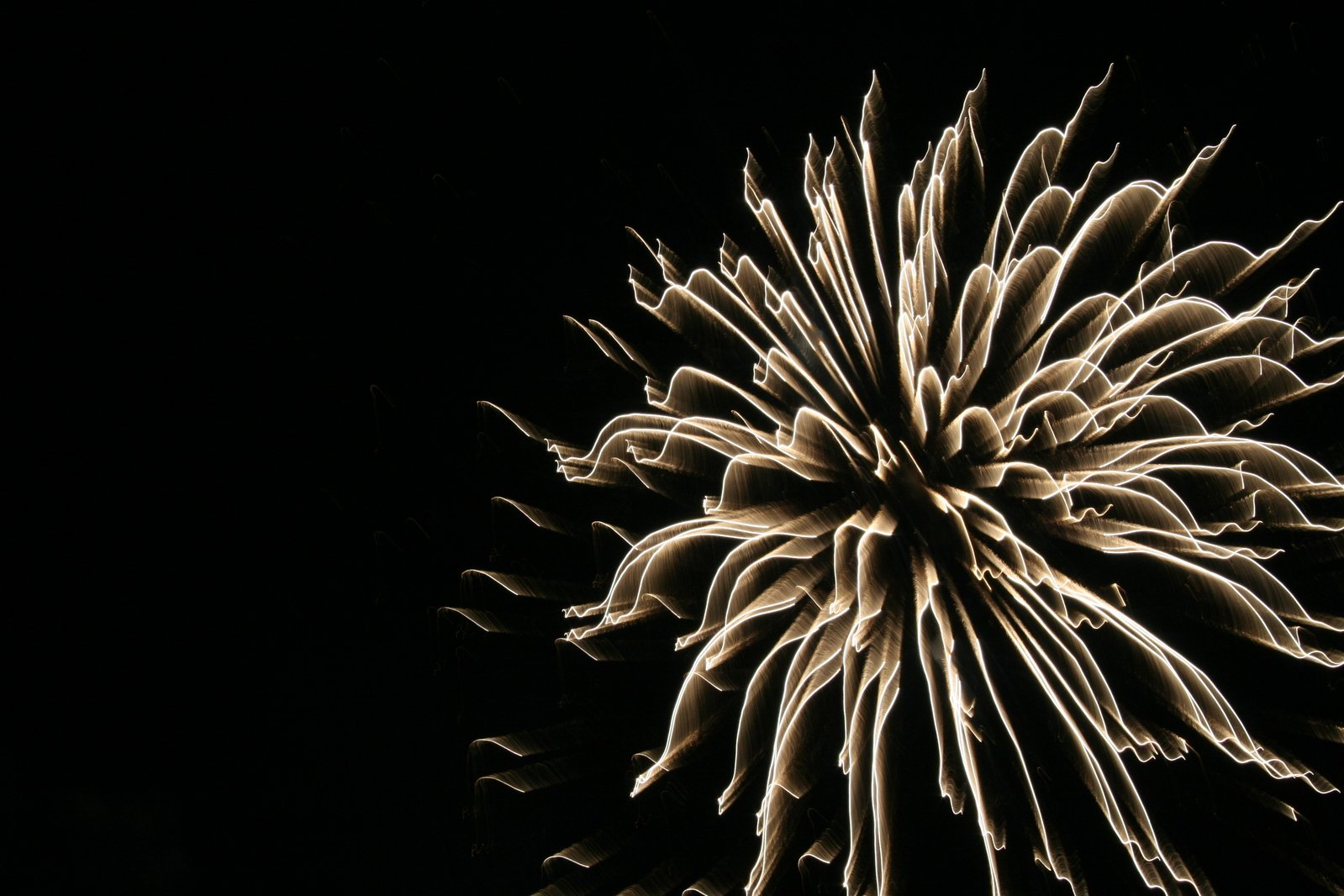 Black Cat Fireworks Signs