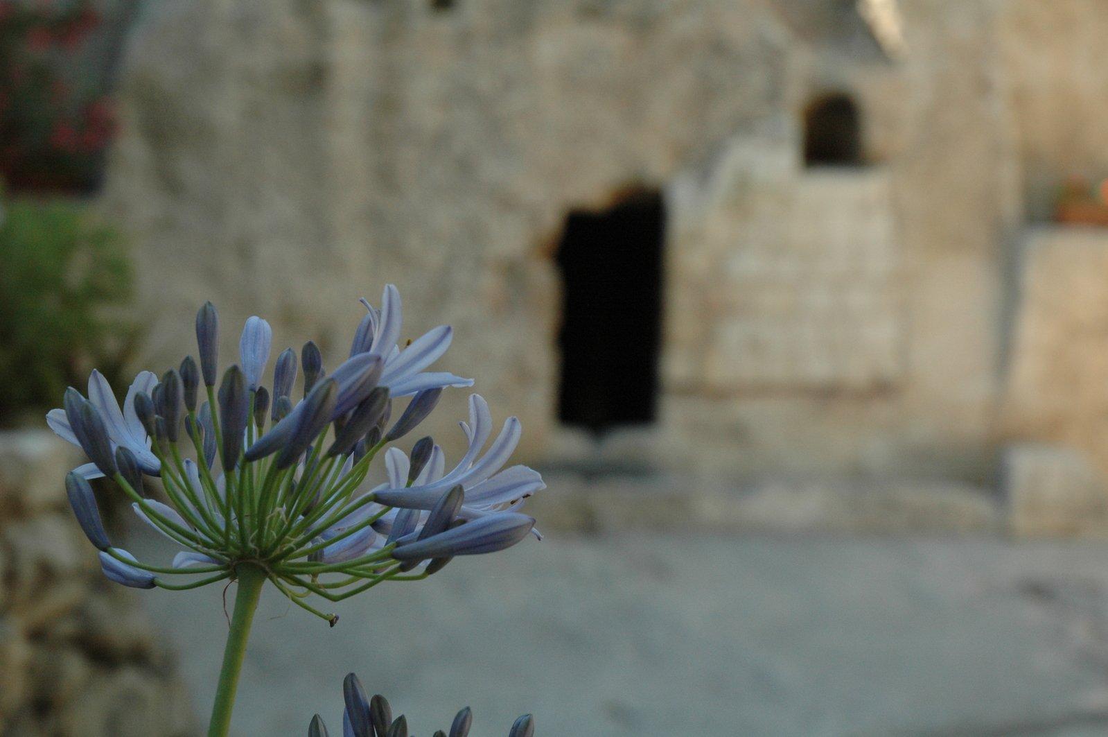 Jardín de la tumba de Jesús 5