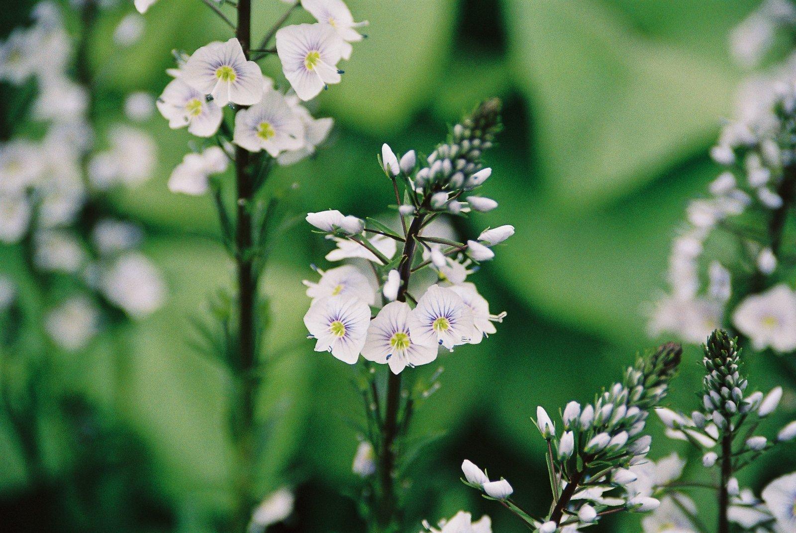 1 花园里的花