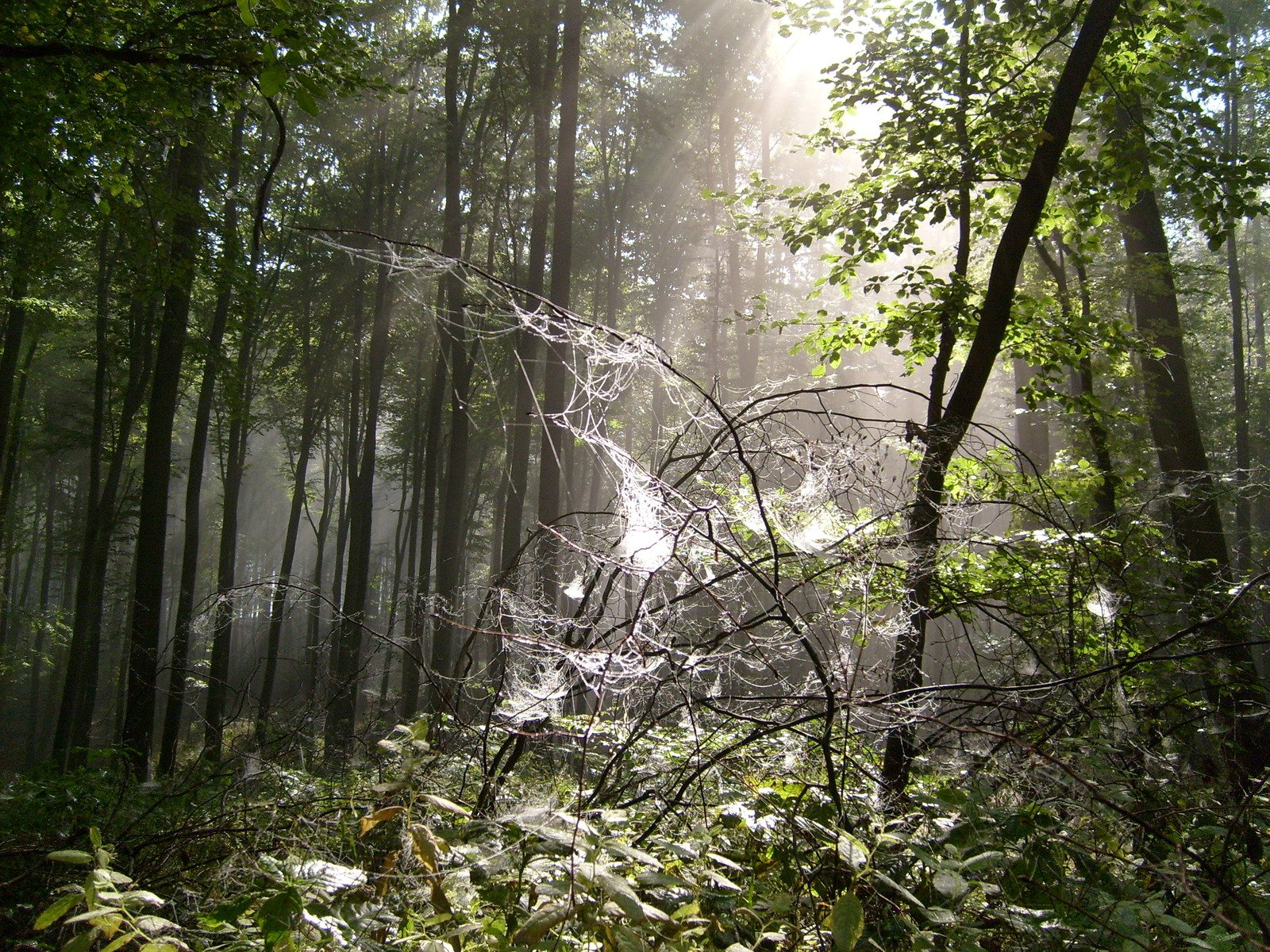 Free Misty Forest 2 Stock Photo Freeimagescom