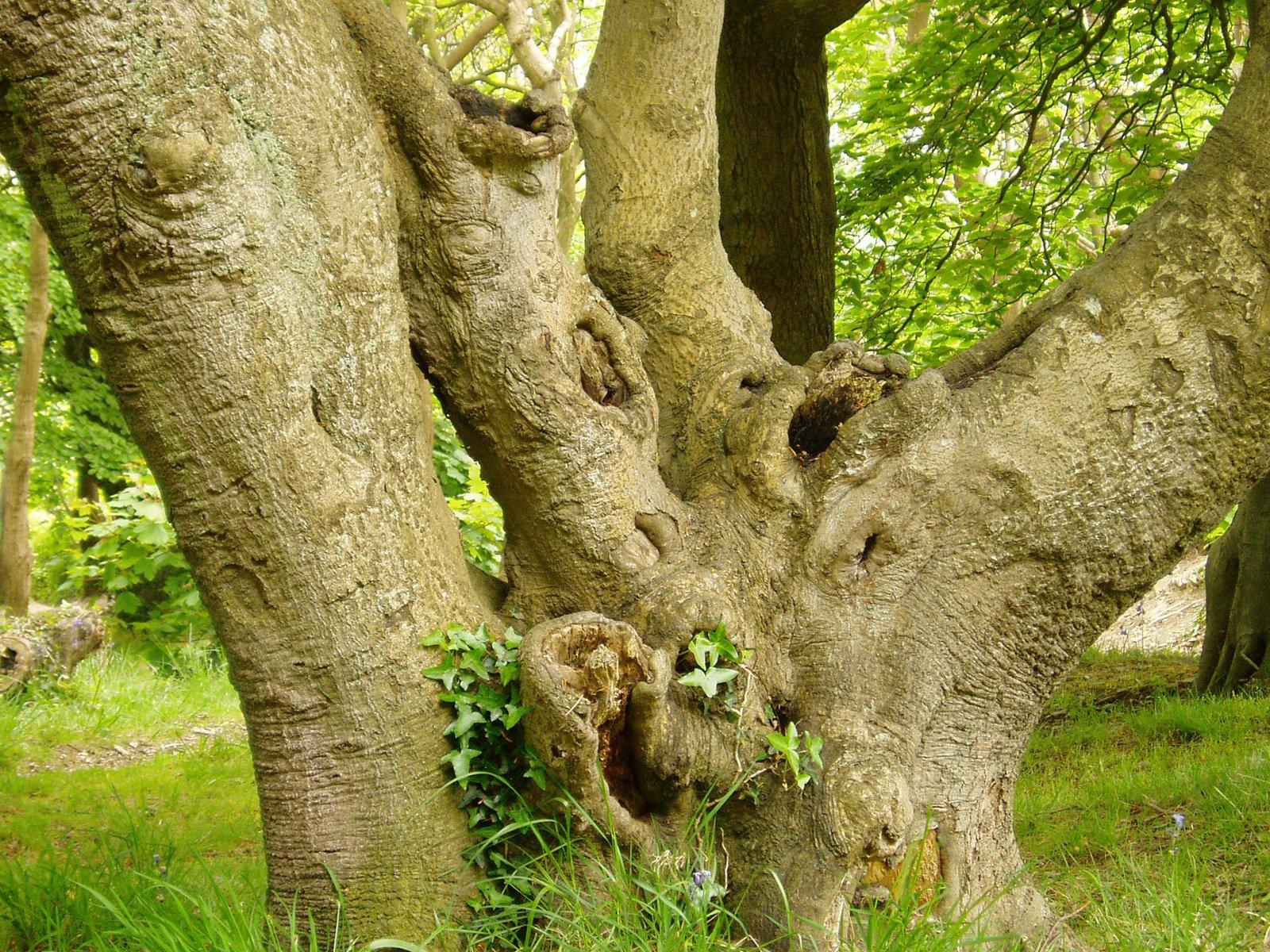 Free Anatomía del árbol 1 Stock Photo - FreeImages.com